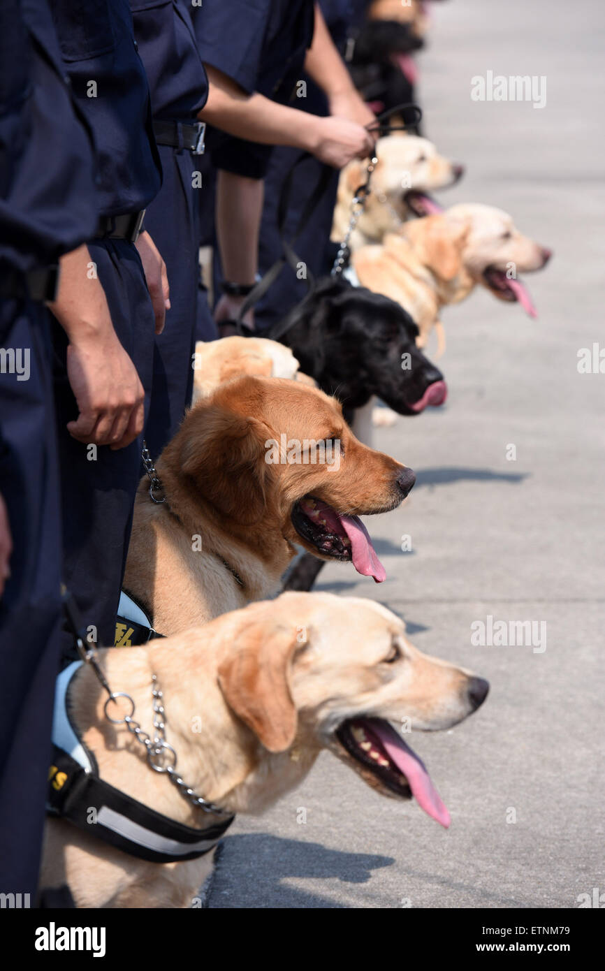 Guangzhou, China. 15th June, 2015. Photo taken on June 15, 2015 shows sniffer dogs  at a launching ceremony of an - Stock Image