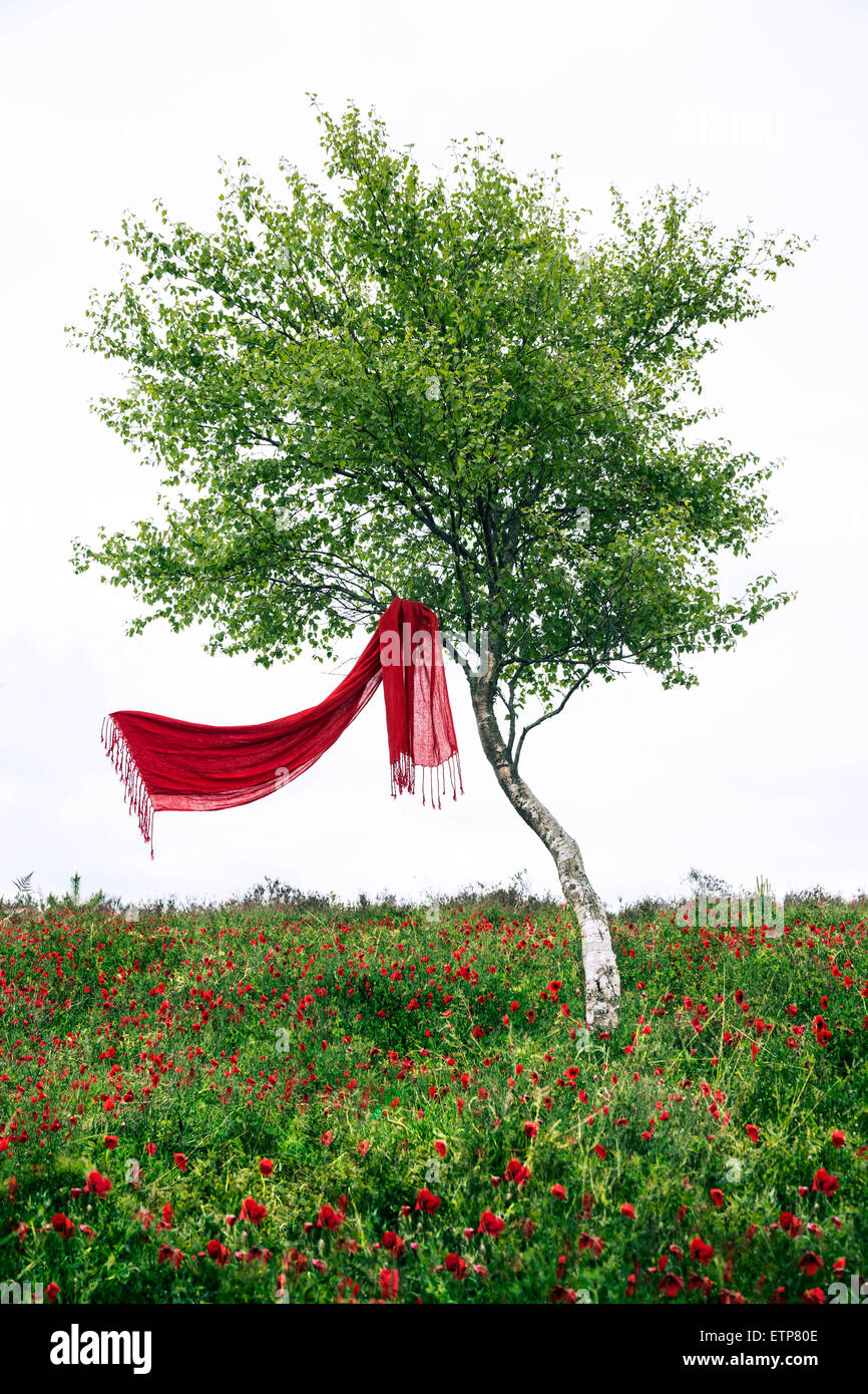 a red scarf hanging in a tree, is blowing in the wind - Stock Image