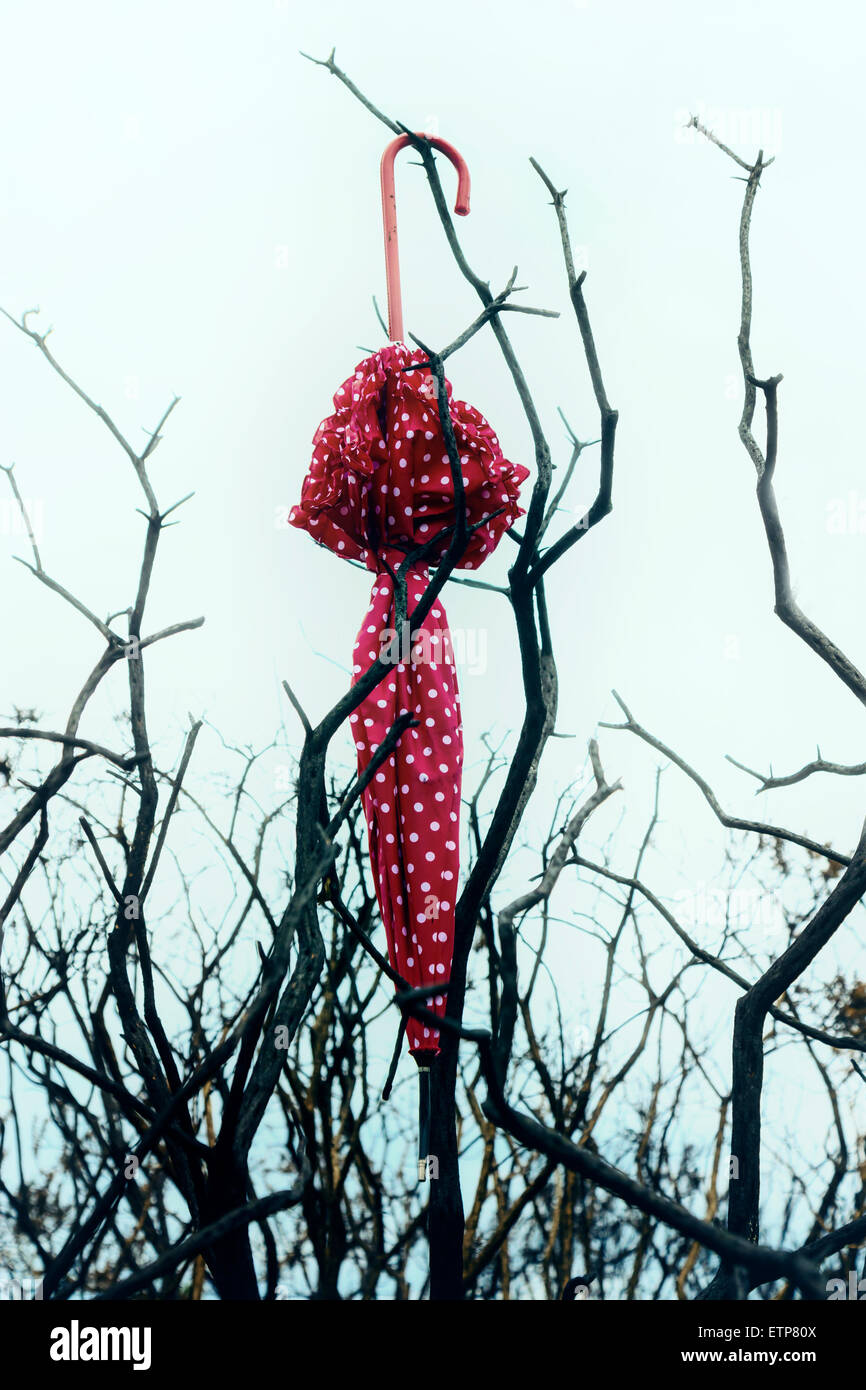 a red umbrella with white polka dots is hanging from a dead tree - Stock Image