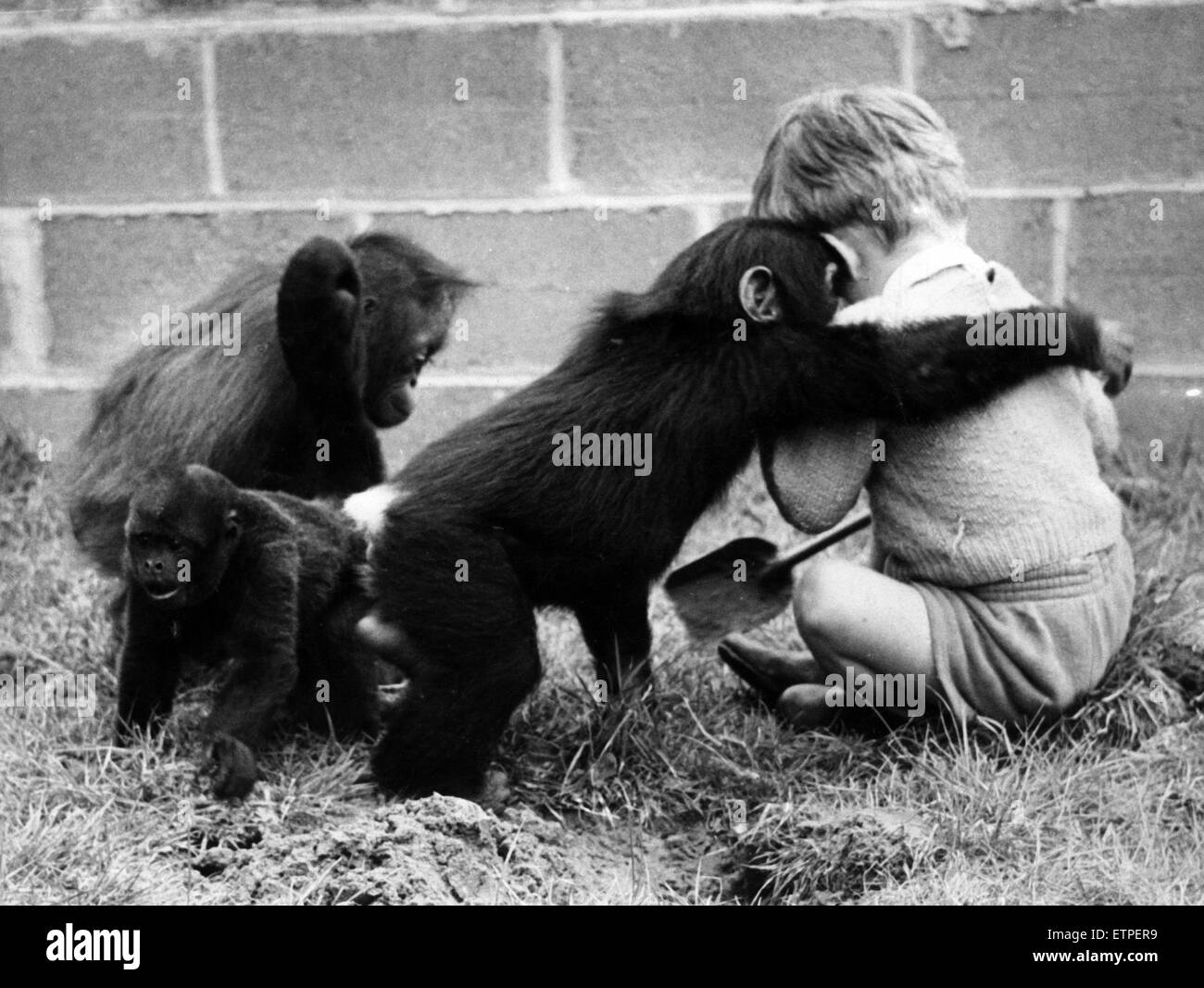Children playing with monkeys at Chester Zoo, 16th May 1960