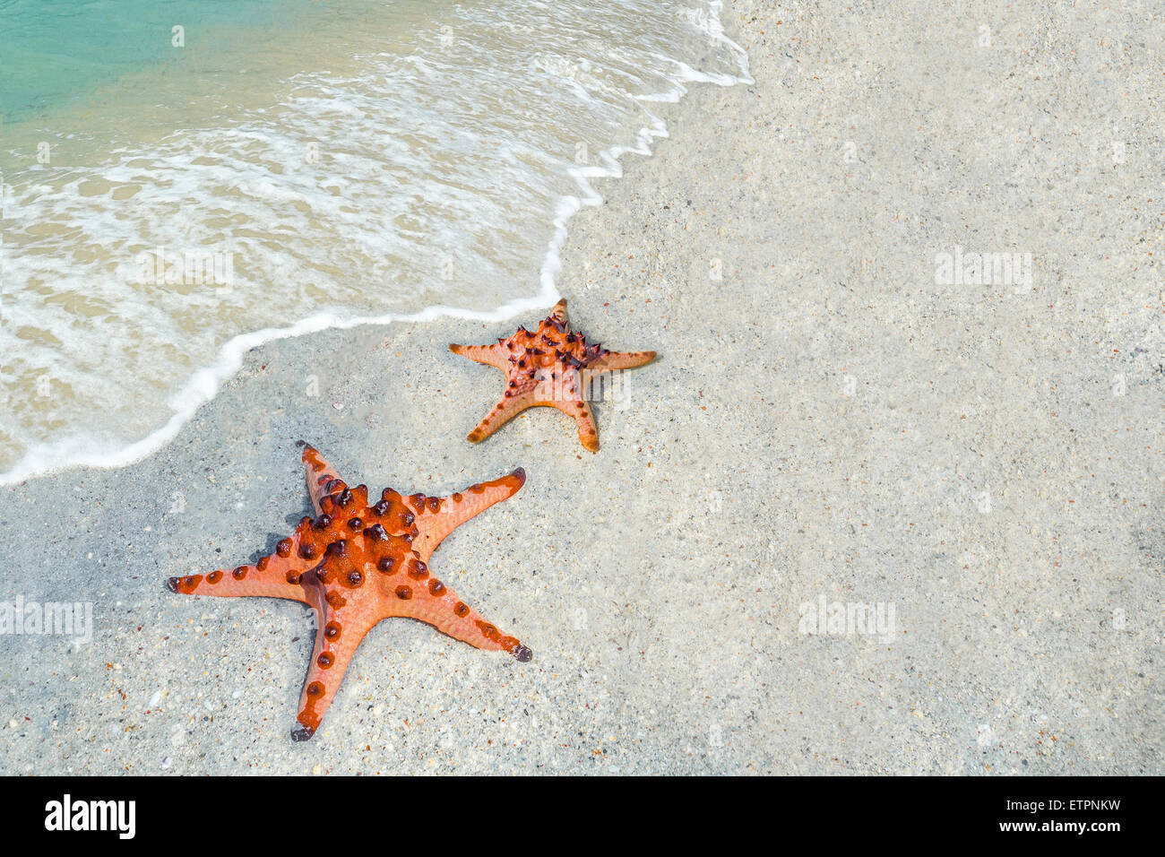 Starfish Wallpaper Stock Photos Images