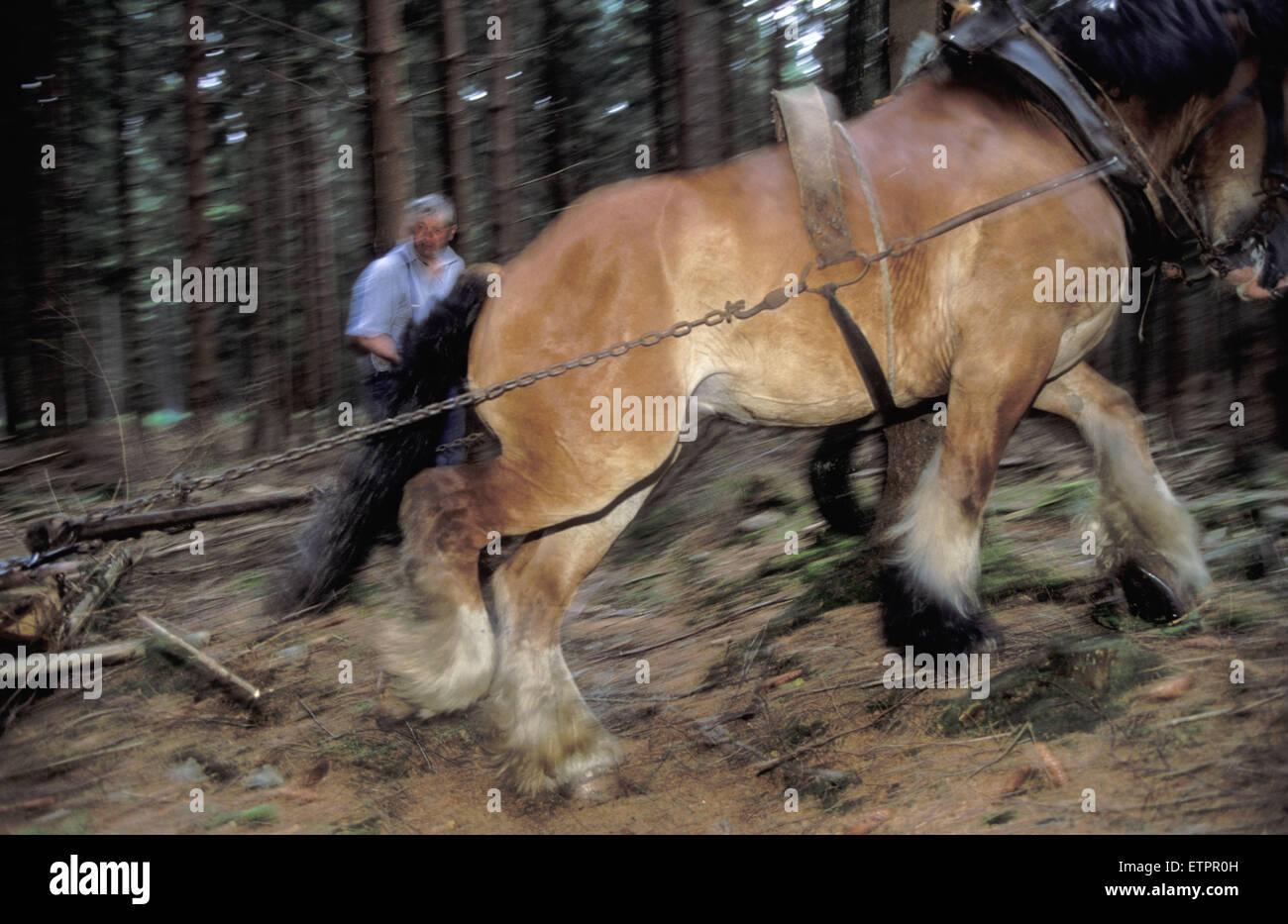 BEL, Belgium, the forest of Raeren, forestry work with