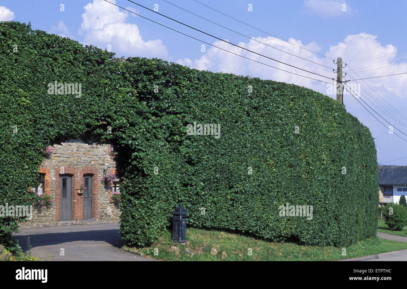 BEL, Belgium, Eastbelgium, Xhoffraix, the village of the hedges. <the high beech-hedges protect the houses against Stock Photo