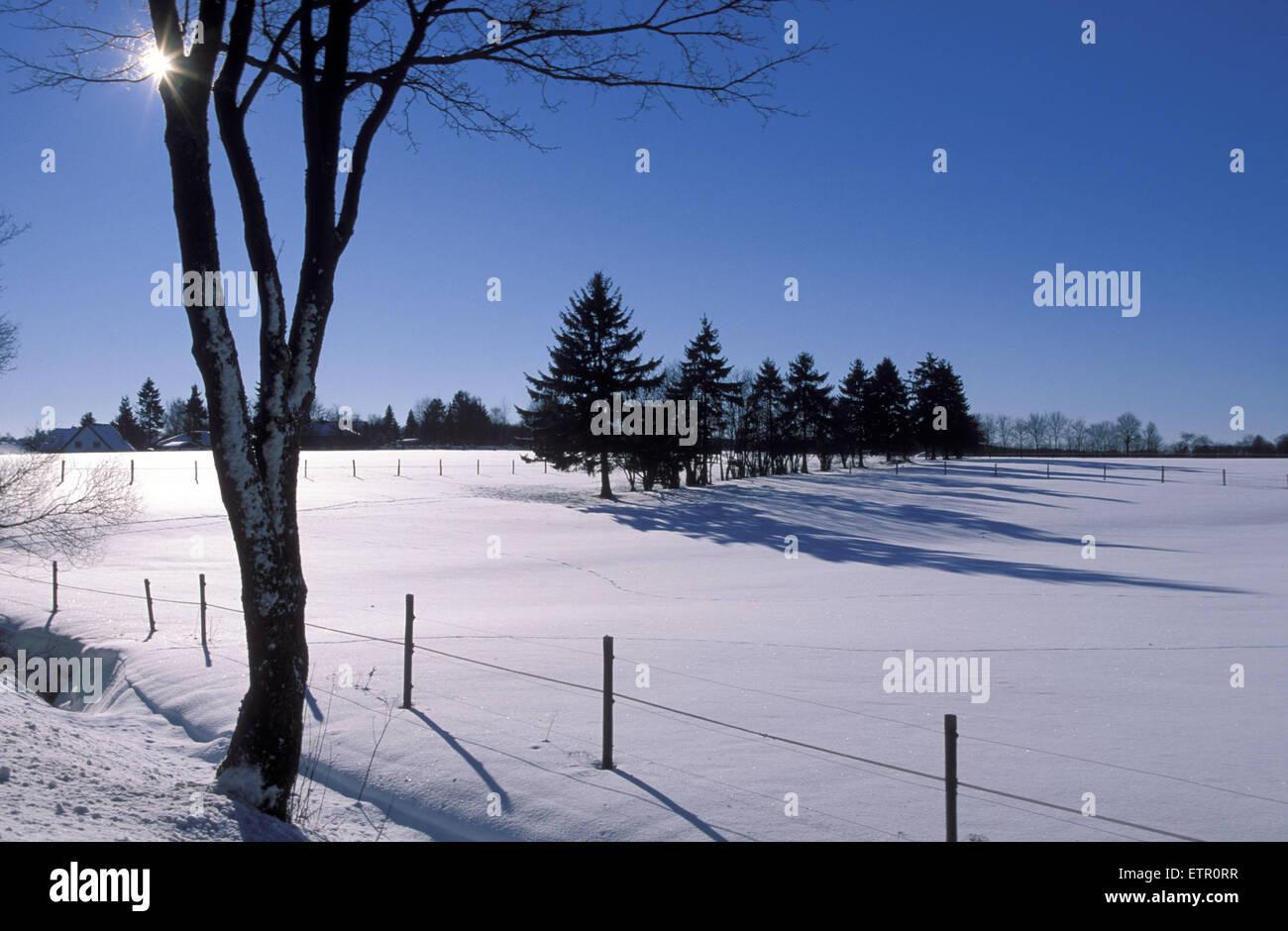 Europe, Belgium, winter at the high-moor Hohes Venn, spruces  EuropaL, Belgien, das Hochmoor Hohes Venn, das verschneite - Stock Image