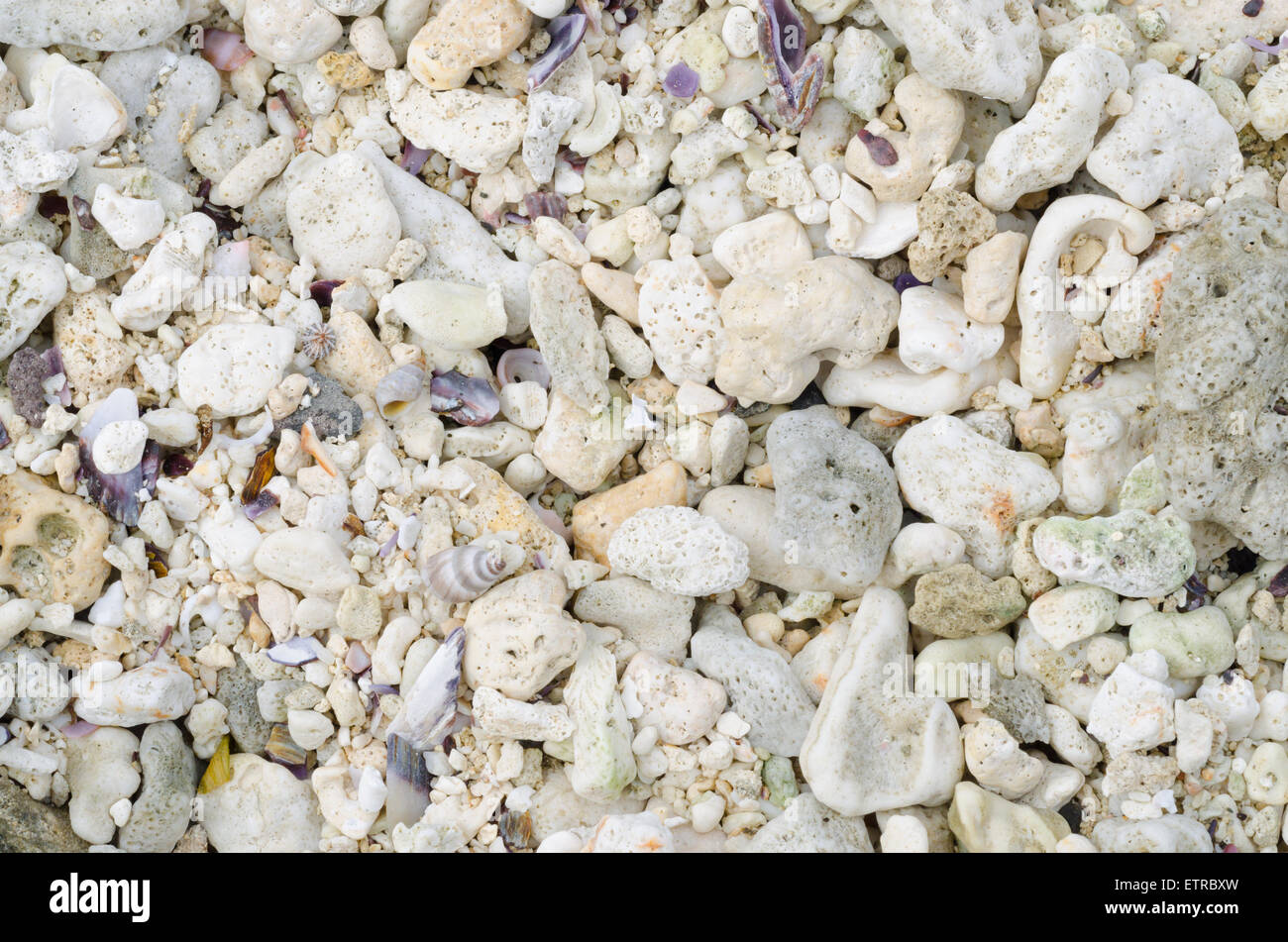 Abstract background, pieces of shells sand - Stock Image