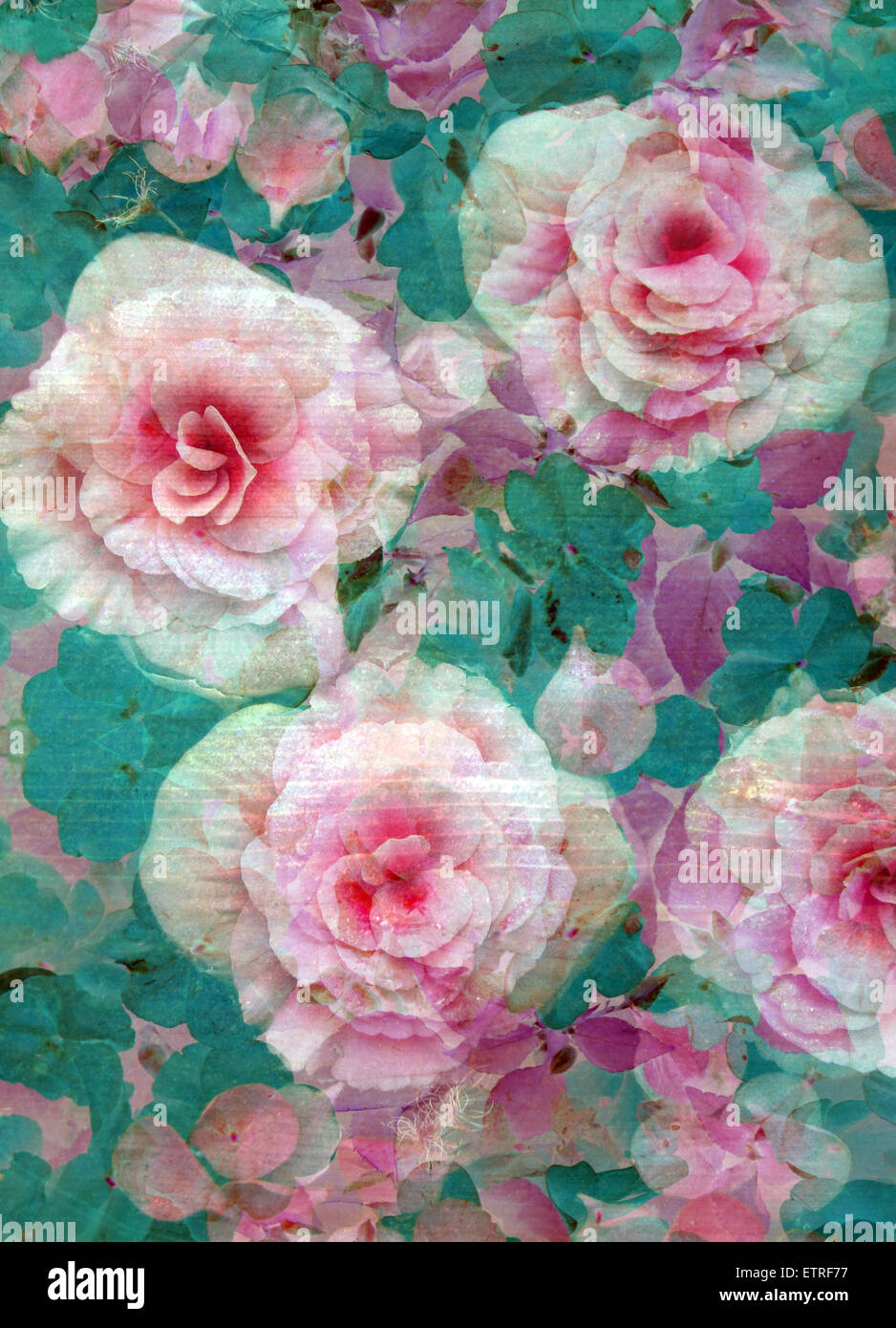 A Floral Montage Stock Photo