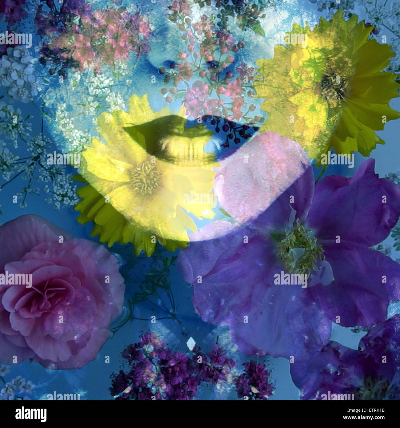 poetic montage of a portrait with colorful floral ornaments - Stock Image