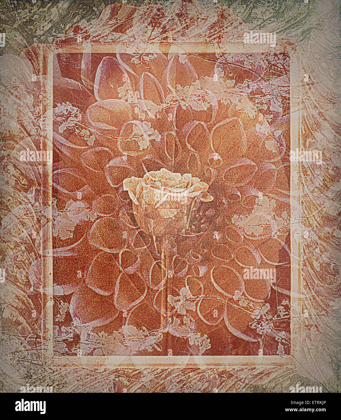 single rose in earthy colors vintage style in frame, photographic layer work, - Stock Image