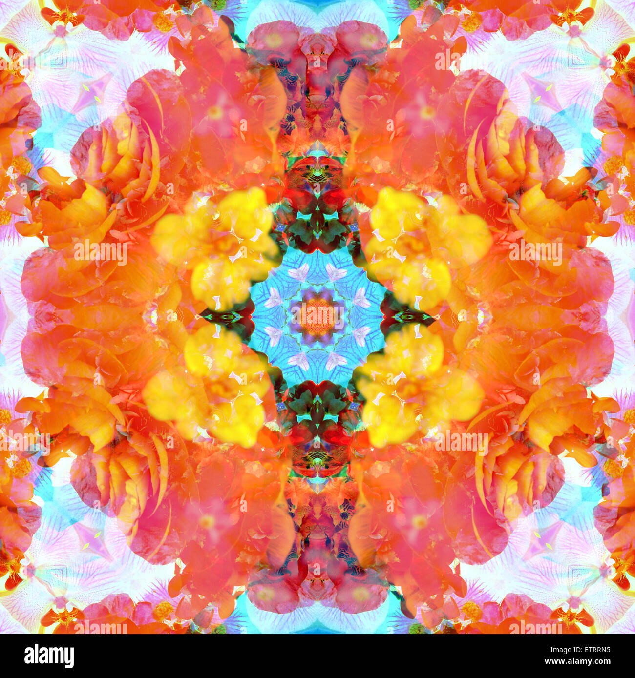 a mandala ornament from flower photographs, conceptual layer work Stock Photo