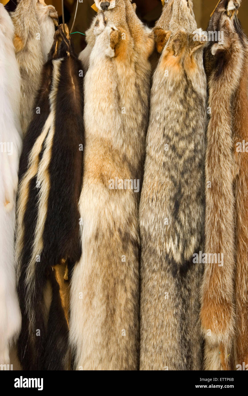 Furs, Grizzly Mountain Long Rifles Horse Ridge Rendezvous, Deschutes County, Oregon Stock Photo
