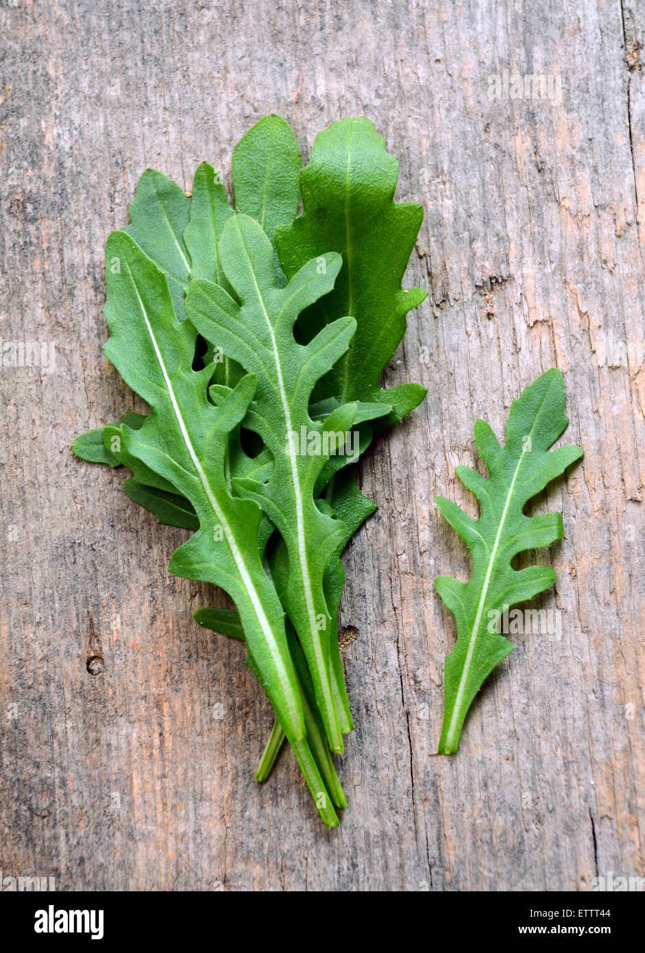 Fresh arugula / salad rocket / roquette / rucola leaves Stock Photo