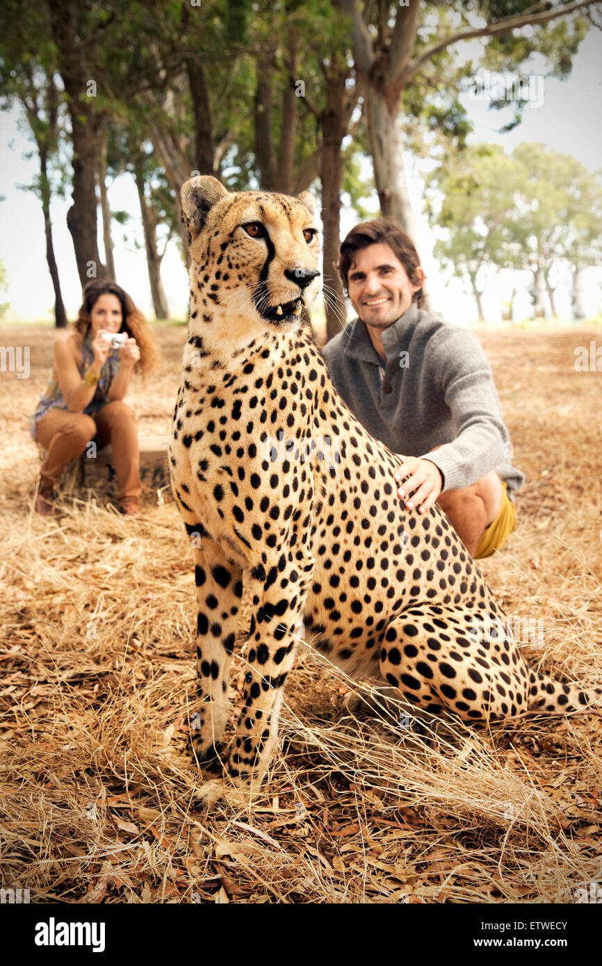 South Africa, man petting tame cheetah on meadow with woman in background - Stock Image