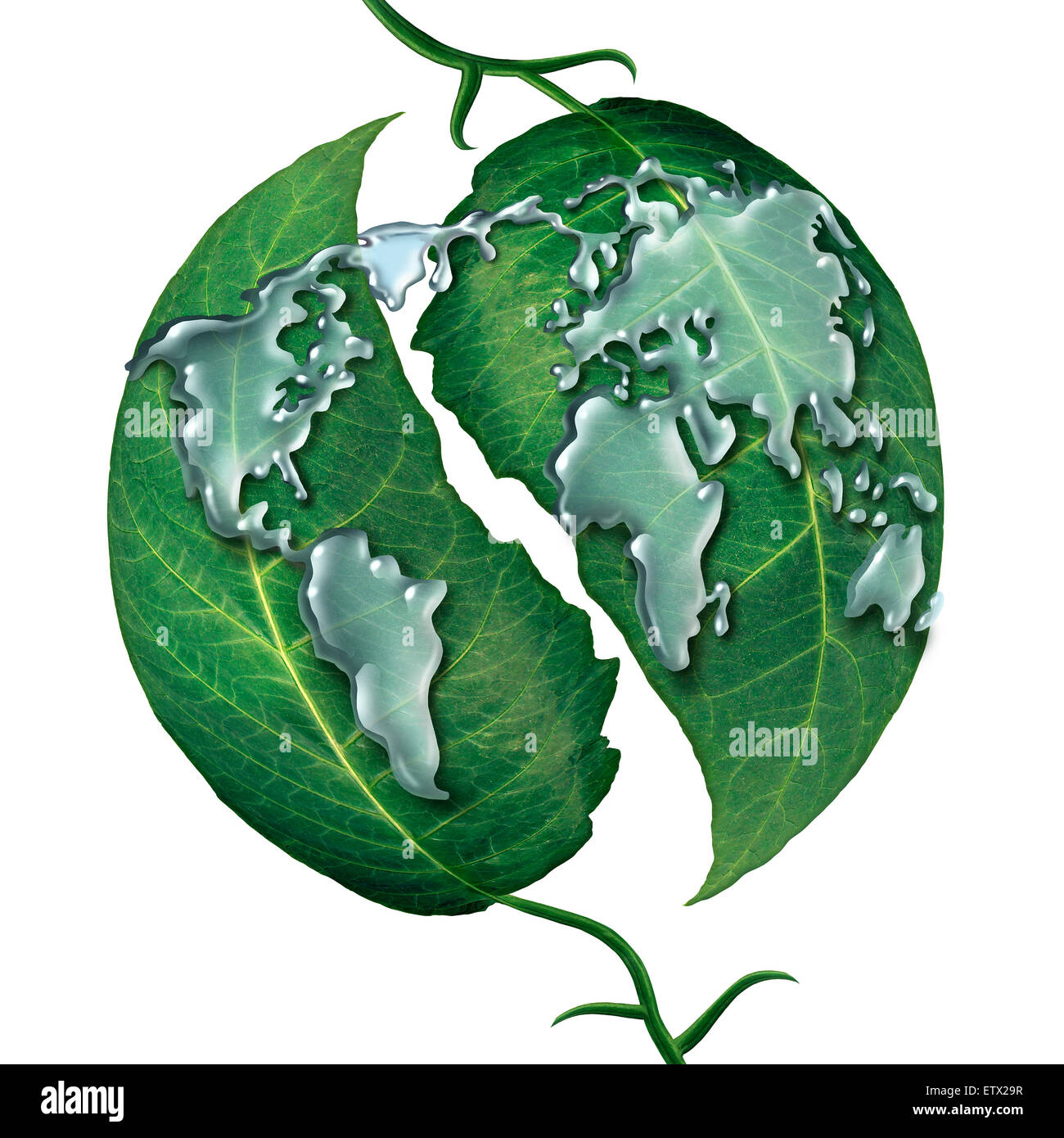 World leaf water drop concept as a group of liquid rain drops shaped as  the map of the earrth on green leaves as - Stock Image