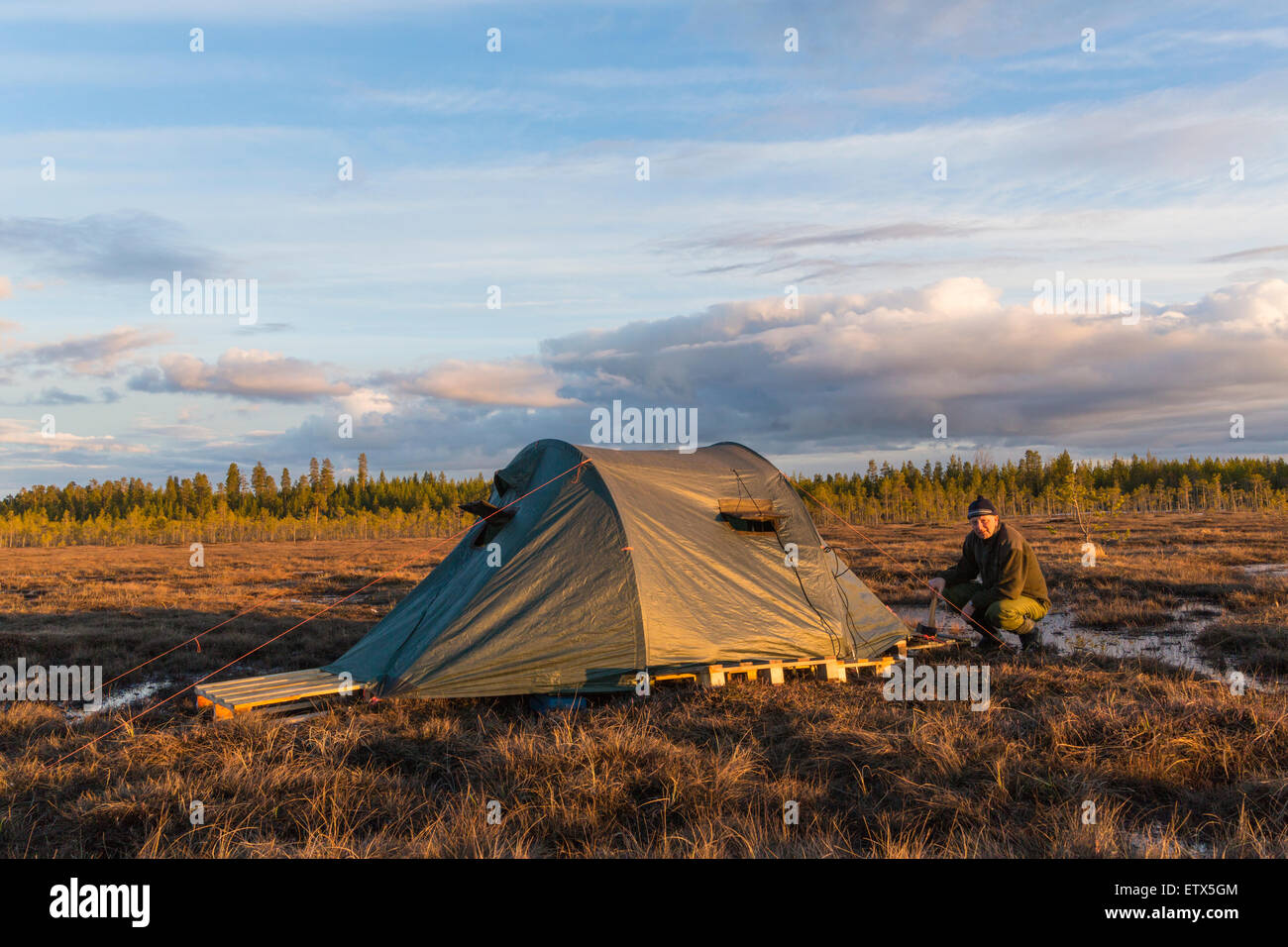 Man, 60-65 years old, putting up his hide and preparing for photography, in Norrbotten, Sweden - Stock Image