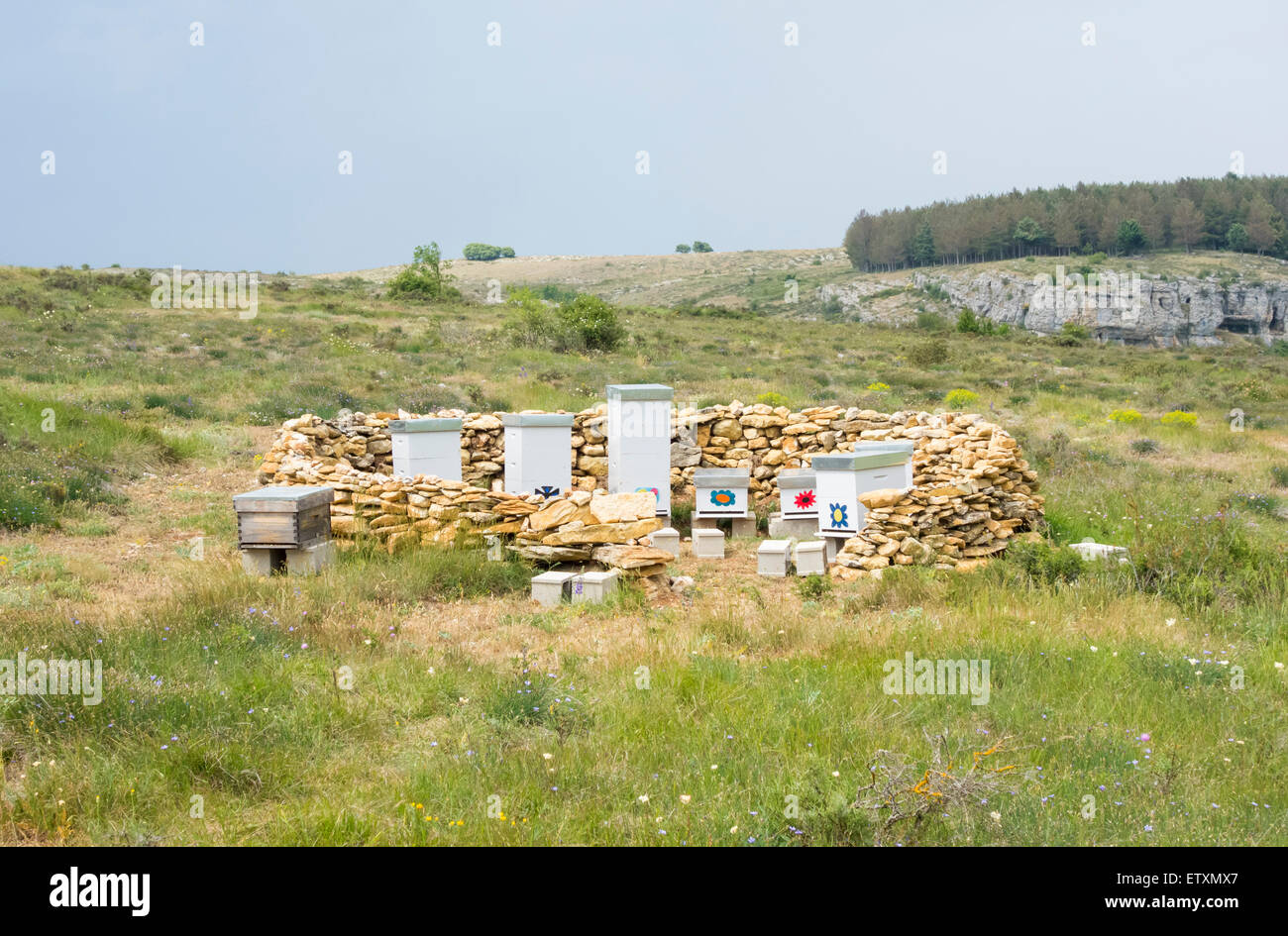 Bee hives in field in Spain - Stock Image