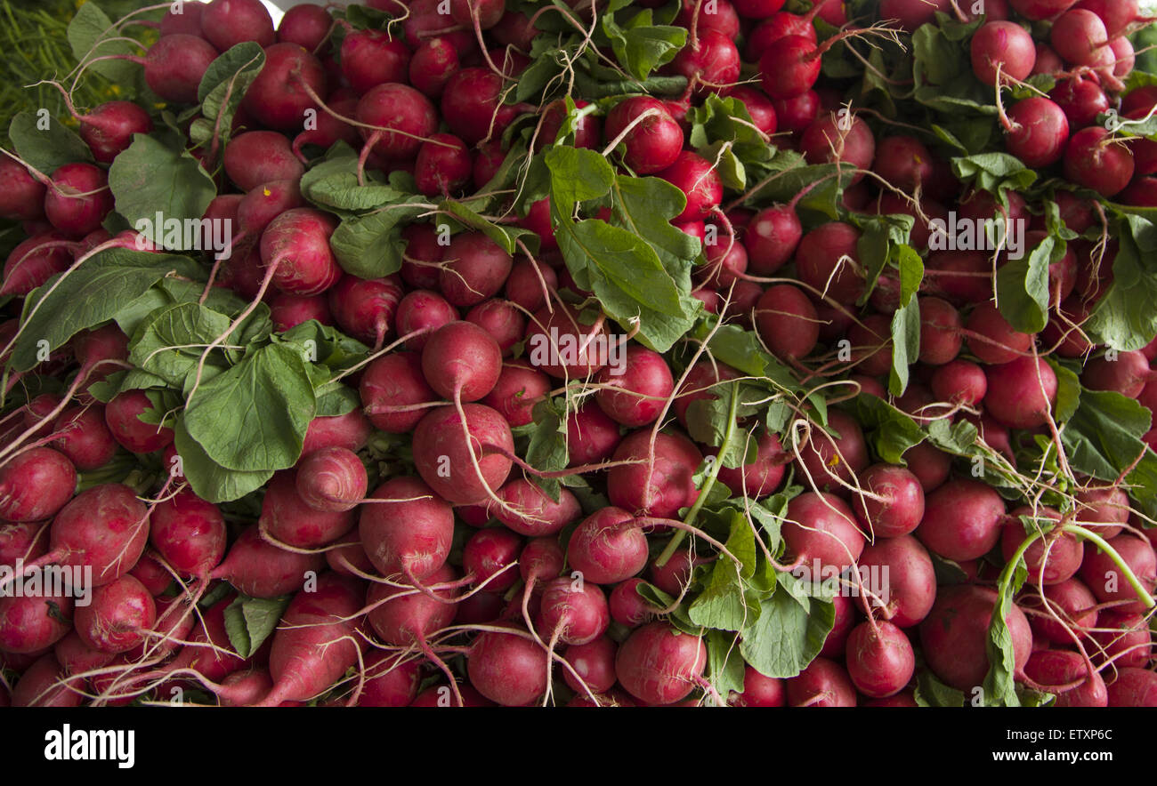 Fresh radishes  for sale at the Grand Army Plaza Farmers Market in Park Slope, Brooklyn, NY. Stock Photo