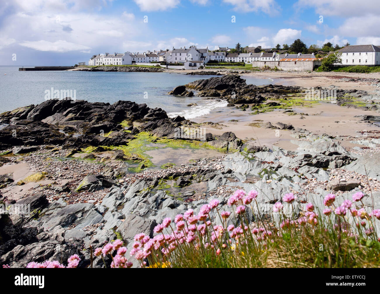Thrift Sea Pink Armeria maritima flowers and view along coast of Loch Indaal to Port Charlotte Isle of Islay Inner - Stock Image