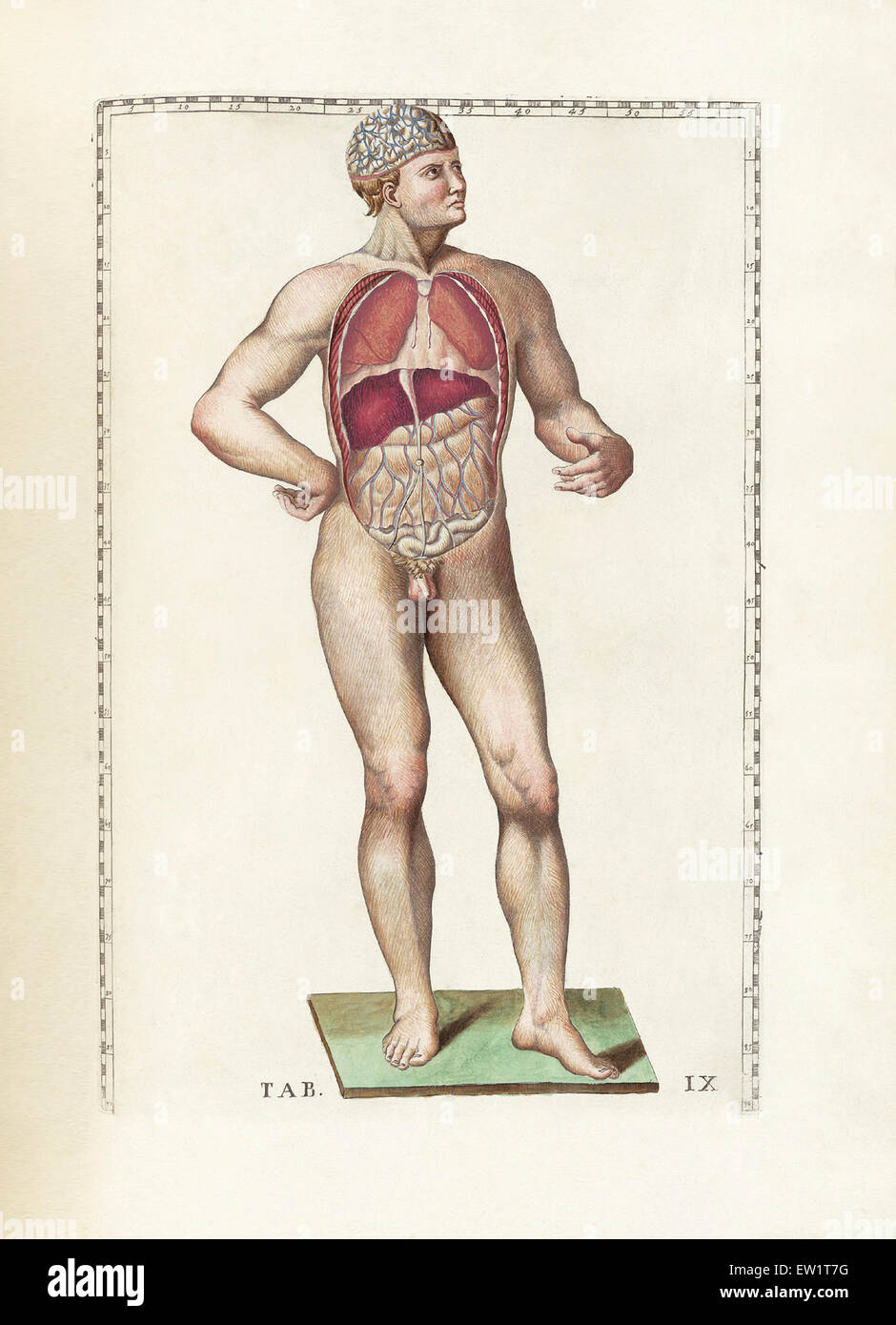 The Science Of Human Anatomy By Bartholomeo Eustachi Depicting The