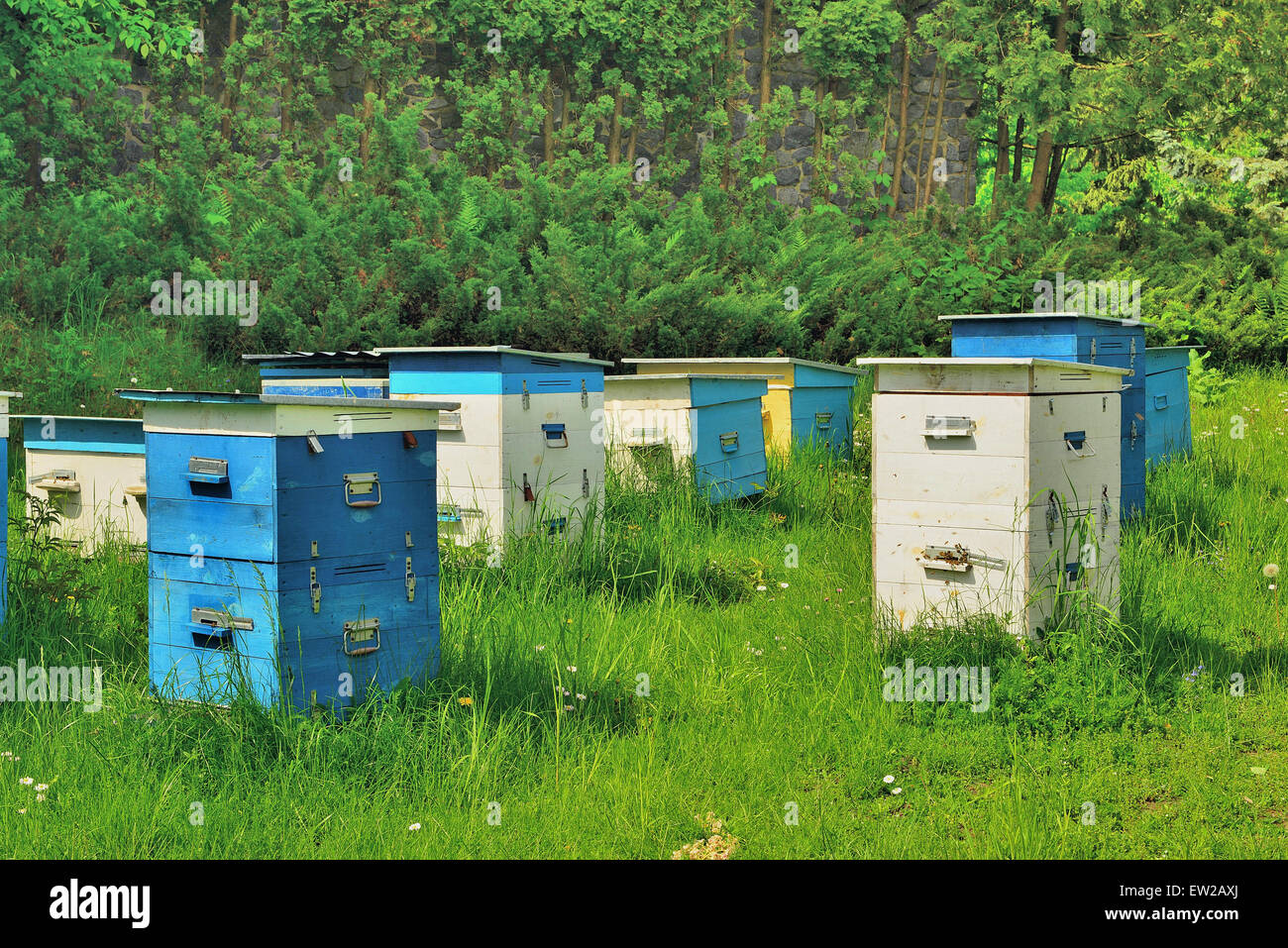 Apiary in the wood - Stock Image