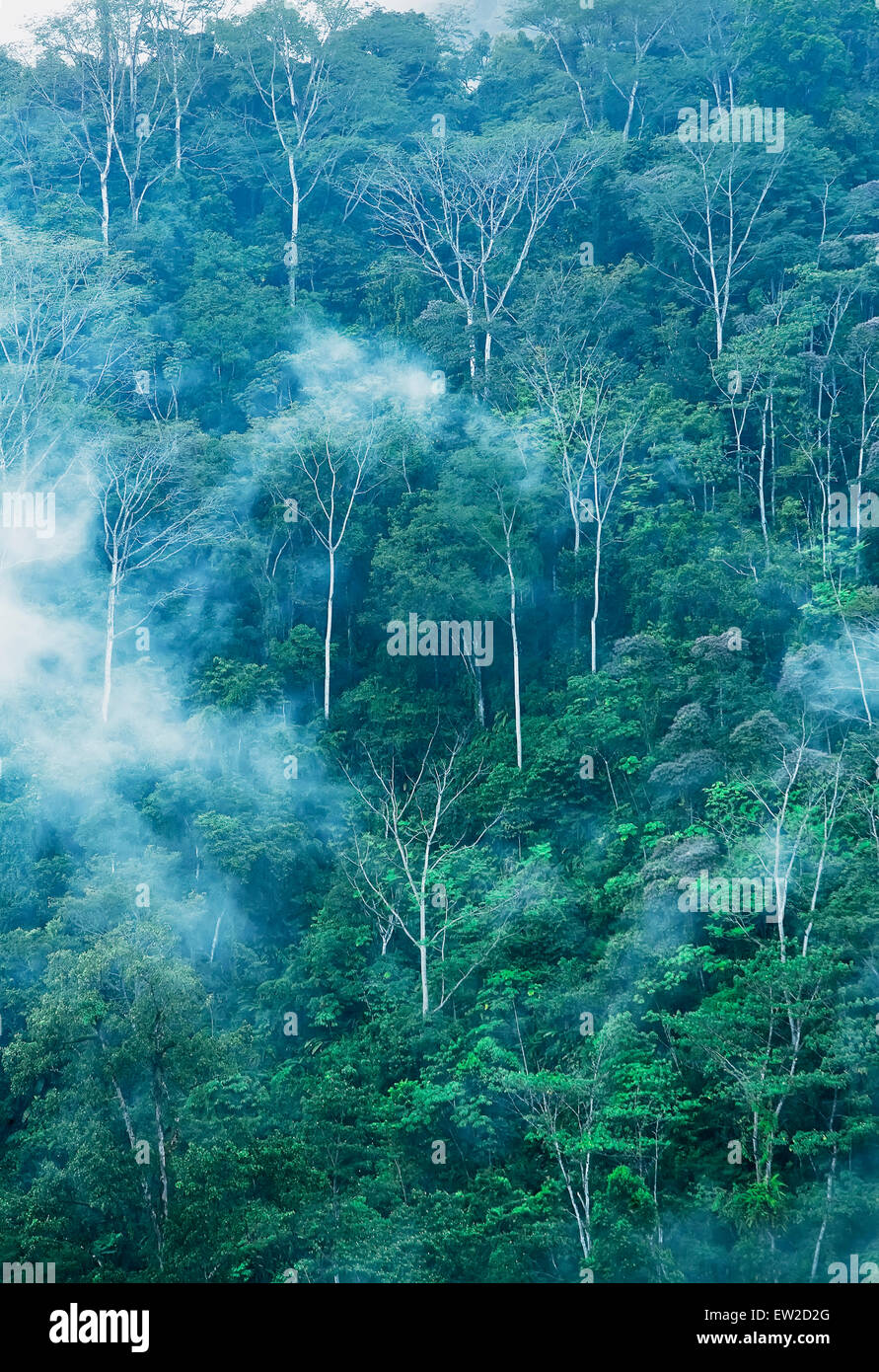 Rainforest with fog, Corcovado National Park, Costa Rica, - Stock Image