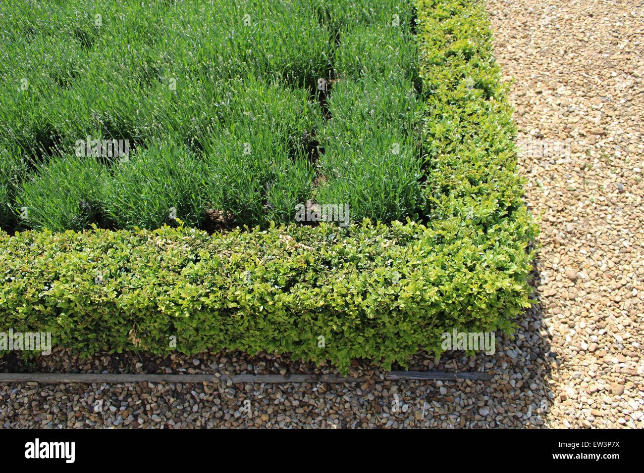 Boxwood Formal Stock Photos & Boxwood Formal Stock Images - Alamy on