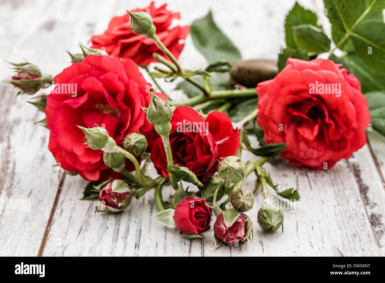 Beautiful flower background roses little stock photos beautiful beautiful fresh red roses in on white wooden background stock image izmirmasajfo