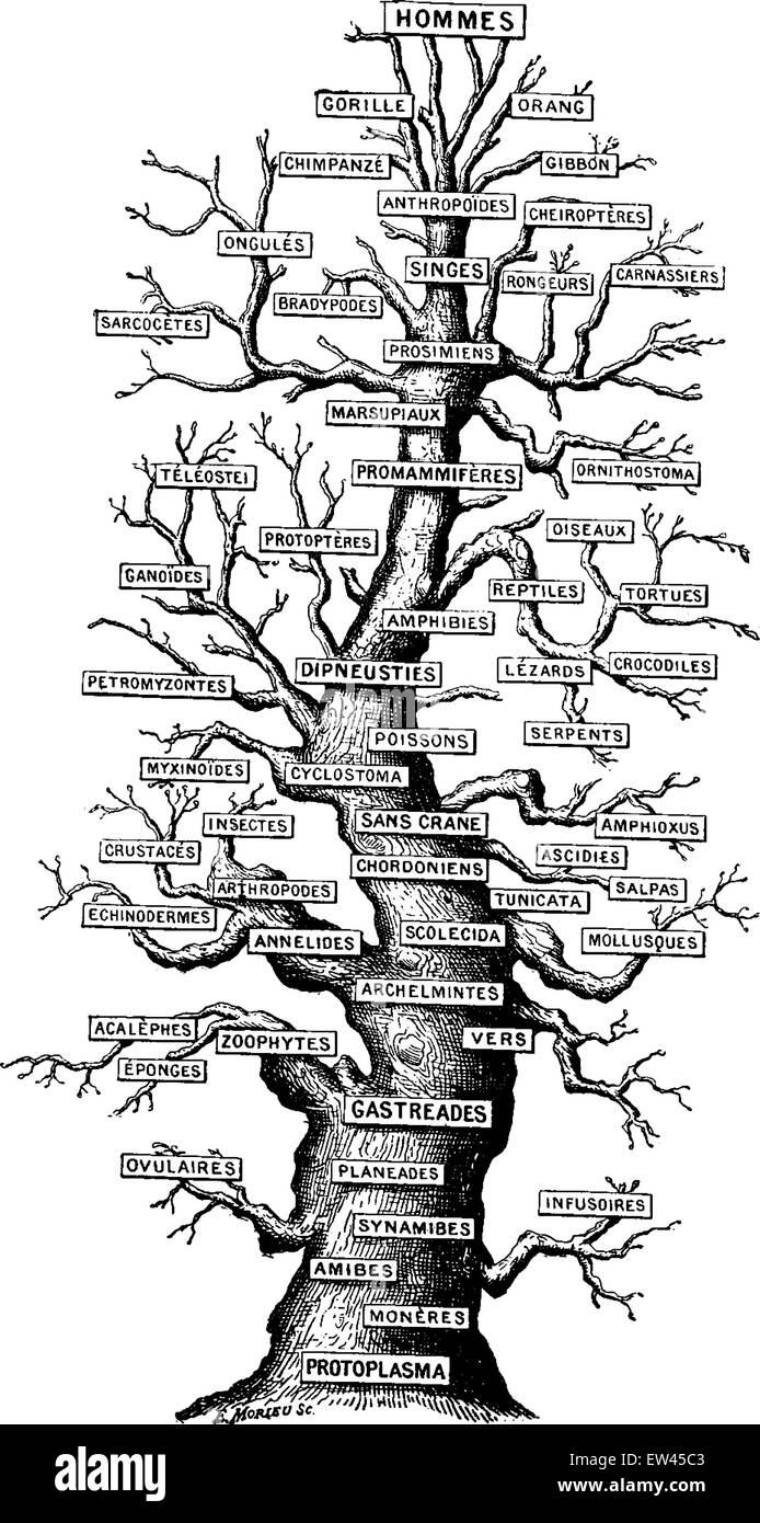 Family tree of life on earth vintage engraved illustration earth family tree of life on earth vintage engraved illustration earth before man 1886 altavistaventures Images