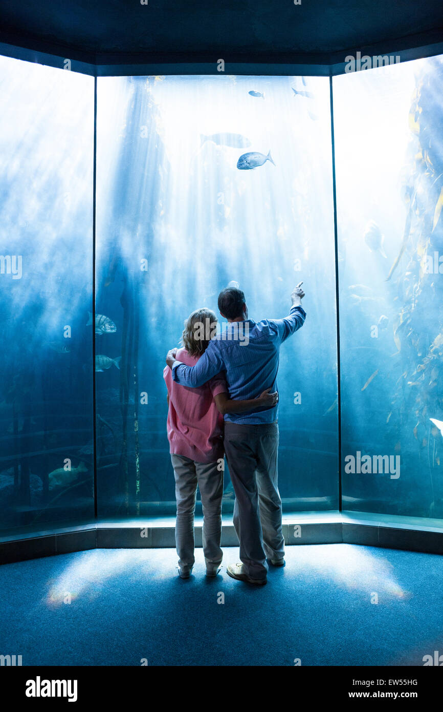 Wear view of couple looking at fish in the tank - Stock Image