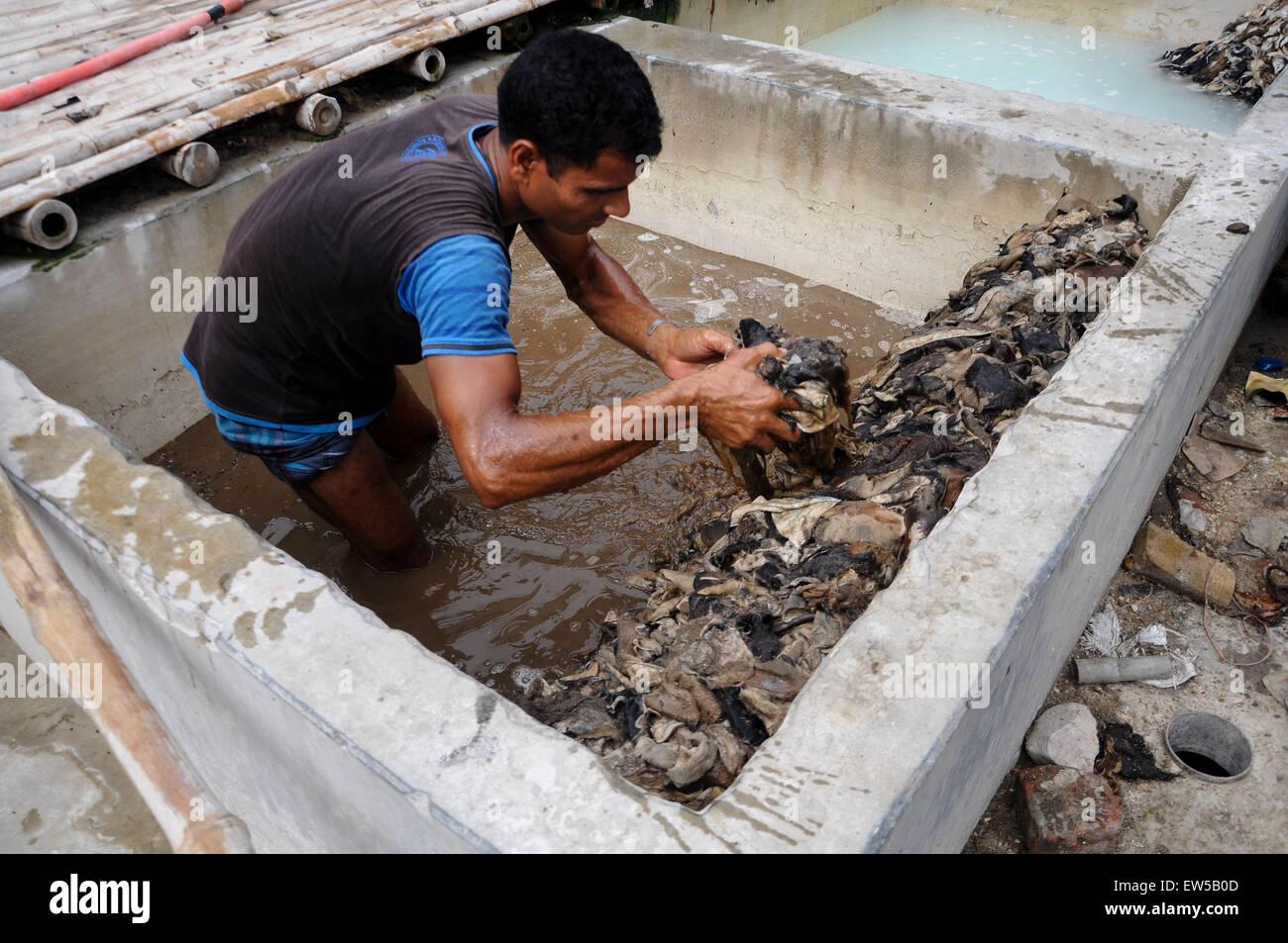 Dhaka, Bangladesh. 18th June, 2015. June 18, 2015 - Dhaka, Bangladesh - A tannery worker is processing raw skins - Stock Image