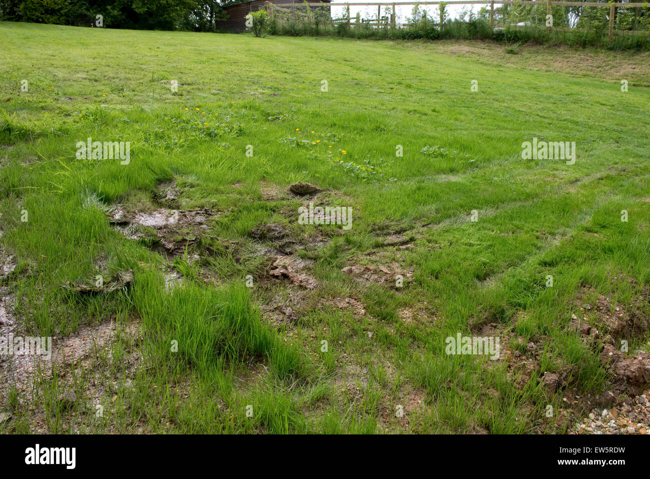Outcrop of spring water on a grass lawn with clay subsoil after a very wet spring, Berkshire, June - Stock Image