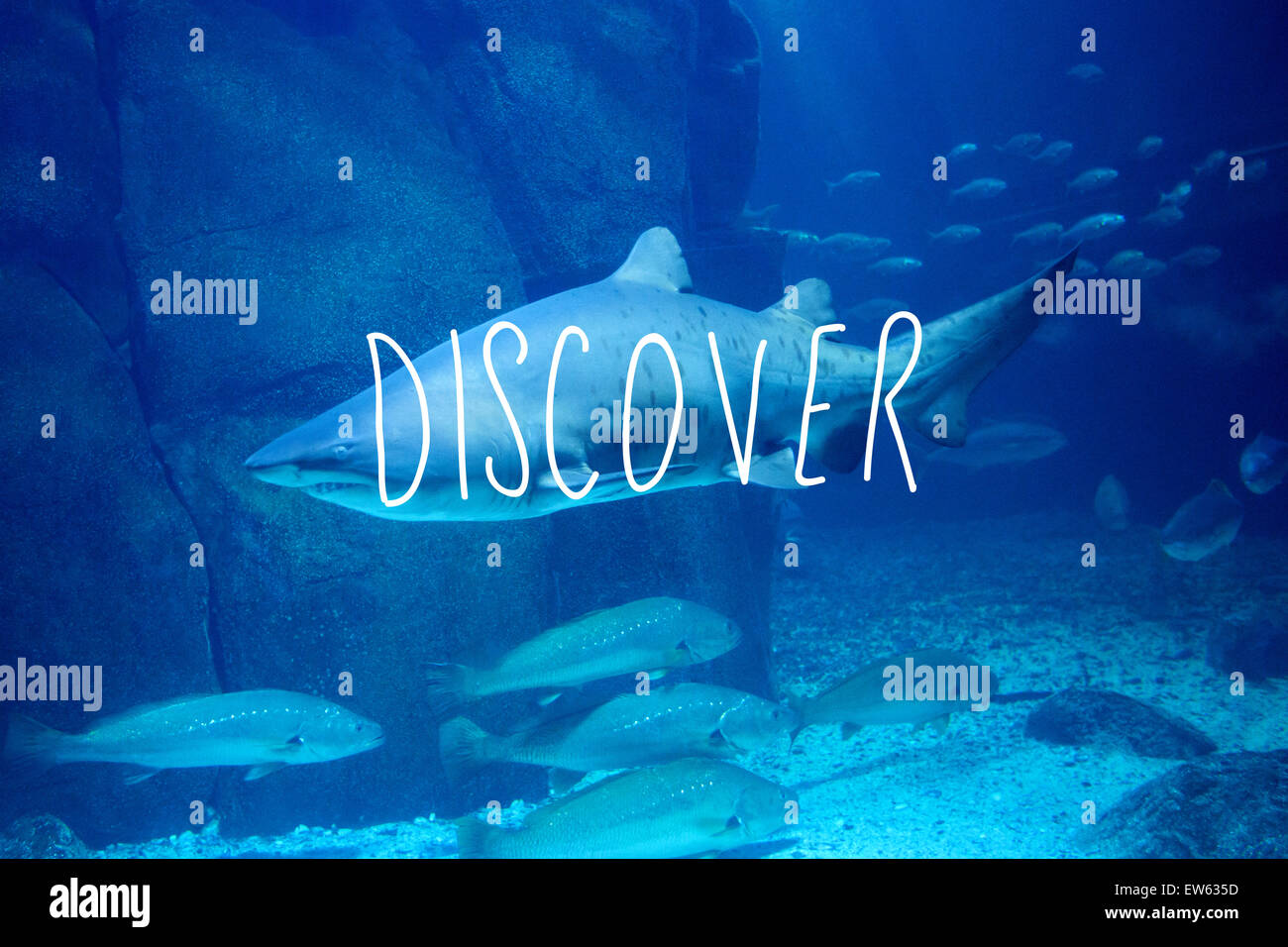 Composite image of discover - Stock Image