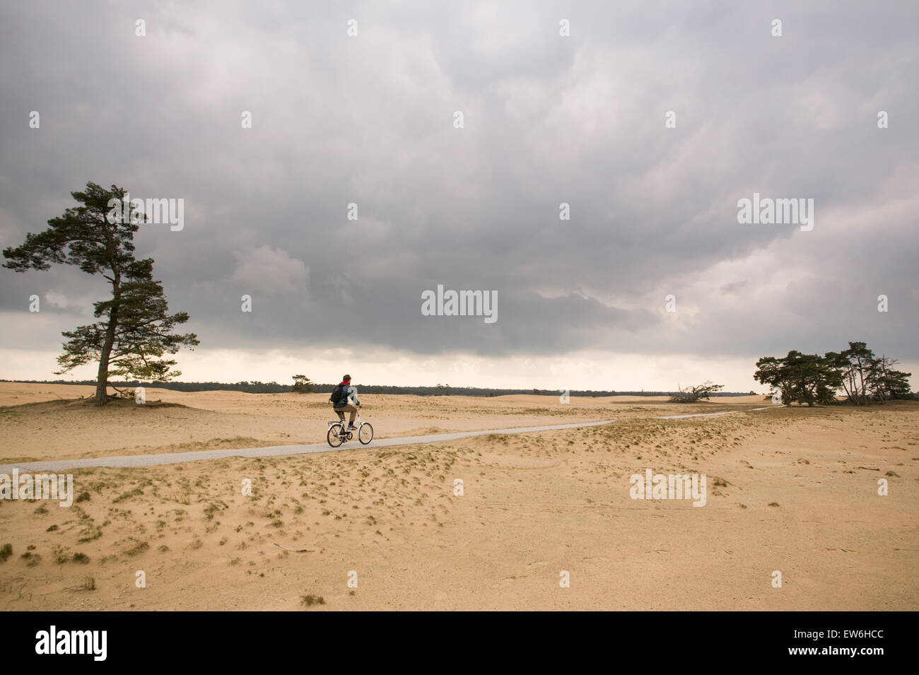 A man cycling in the Netherlands National Park, the Hoge de Veluwe. - Stock Image