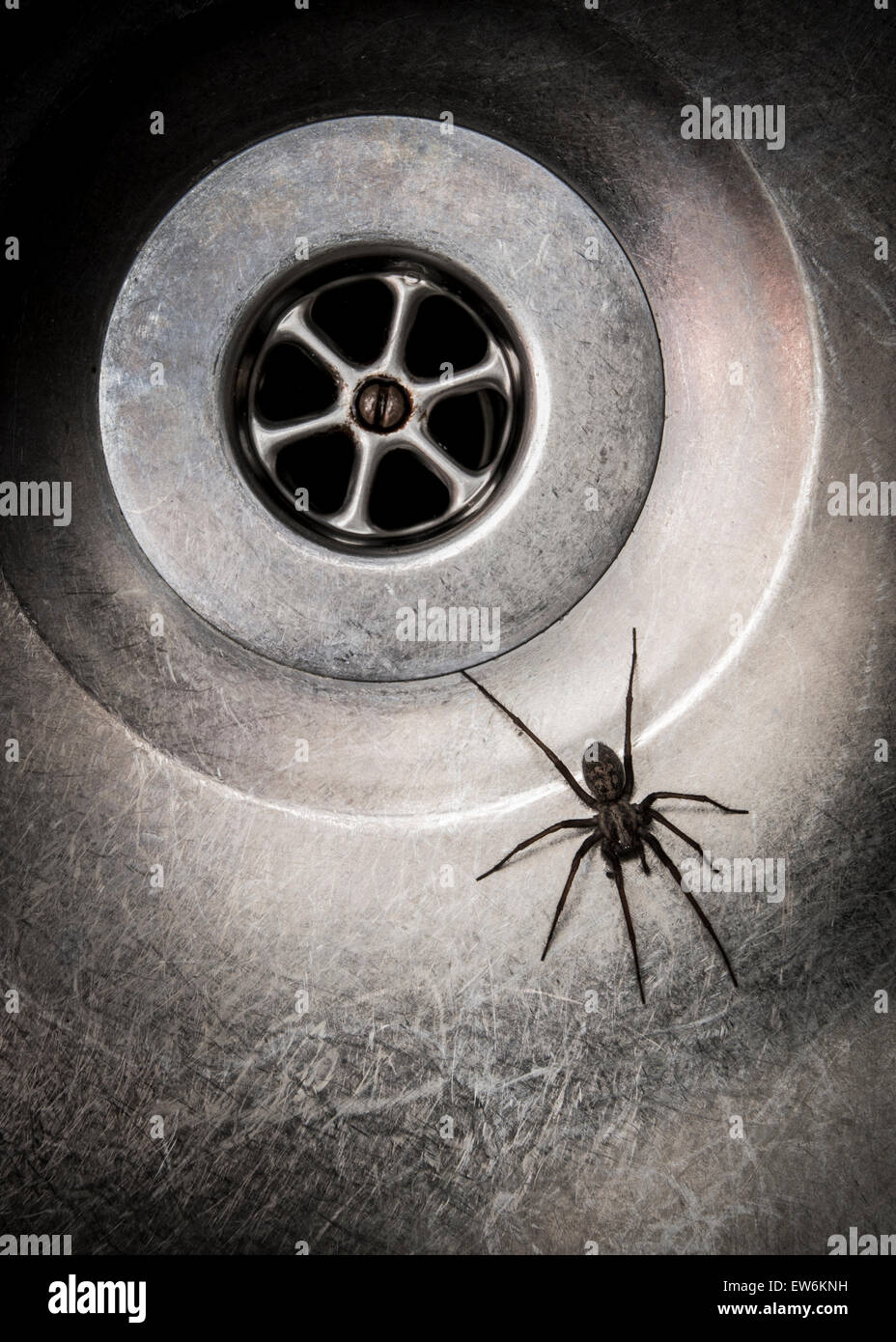 Spider in sink - Stock Image