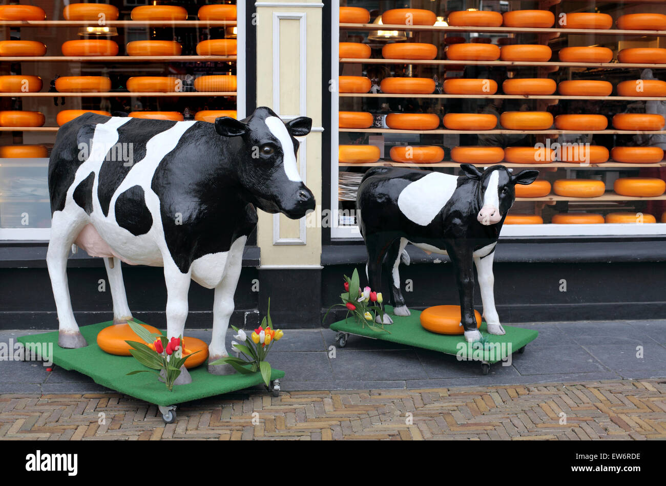 Life-sized models of cow and calf with cheese wheels outside the Willig cheese shop in the Market Square, Delft, - Stock Image