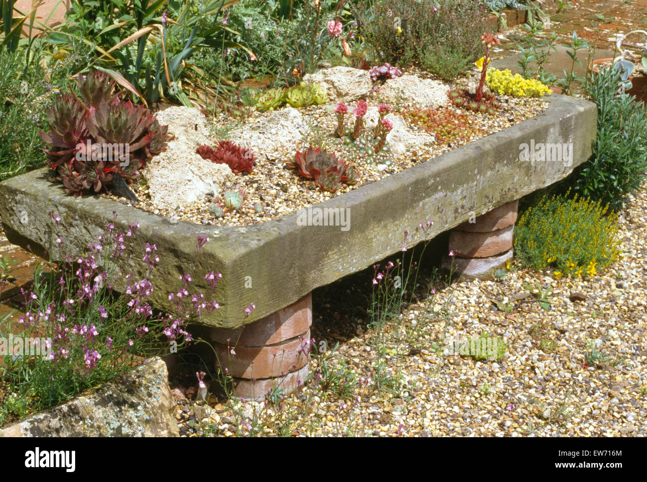 Merveilleux Close Up Of Old Stone Sink Planted With Alpines