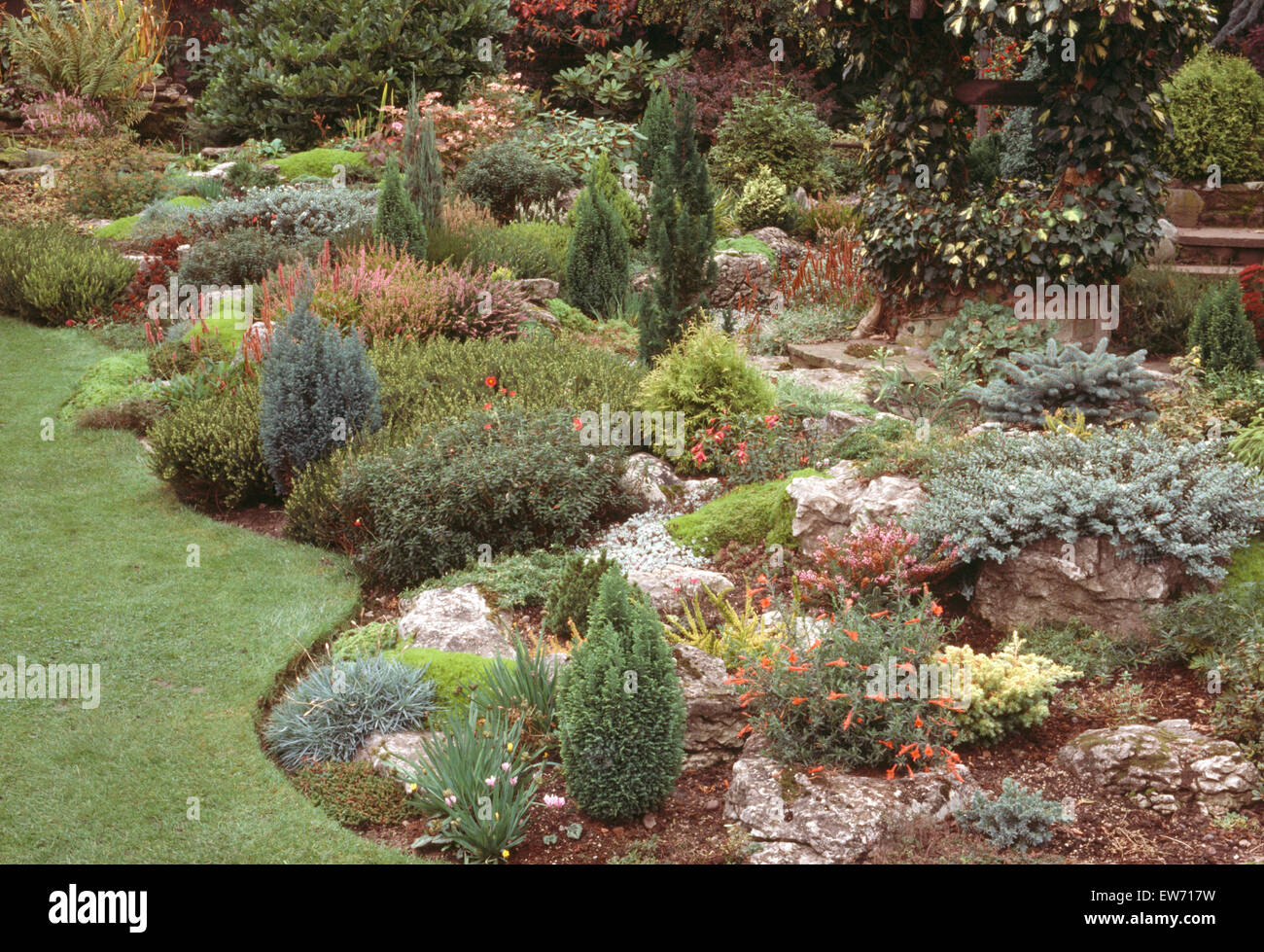 Small conifers and alpine plants in seventies rockery garden with neat edging - Stock Image