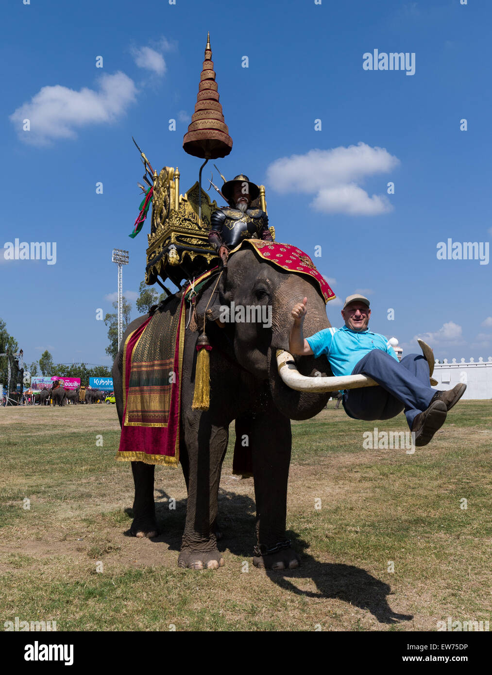 War elephant carrying a tourist on the tusks, Elephant Festival, Elephant Round Up, Surin, Surin Province, Isan, - Stock Image
