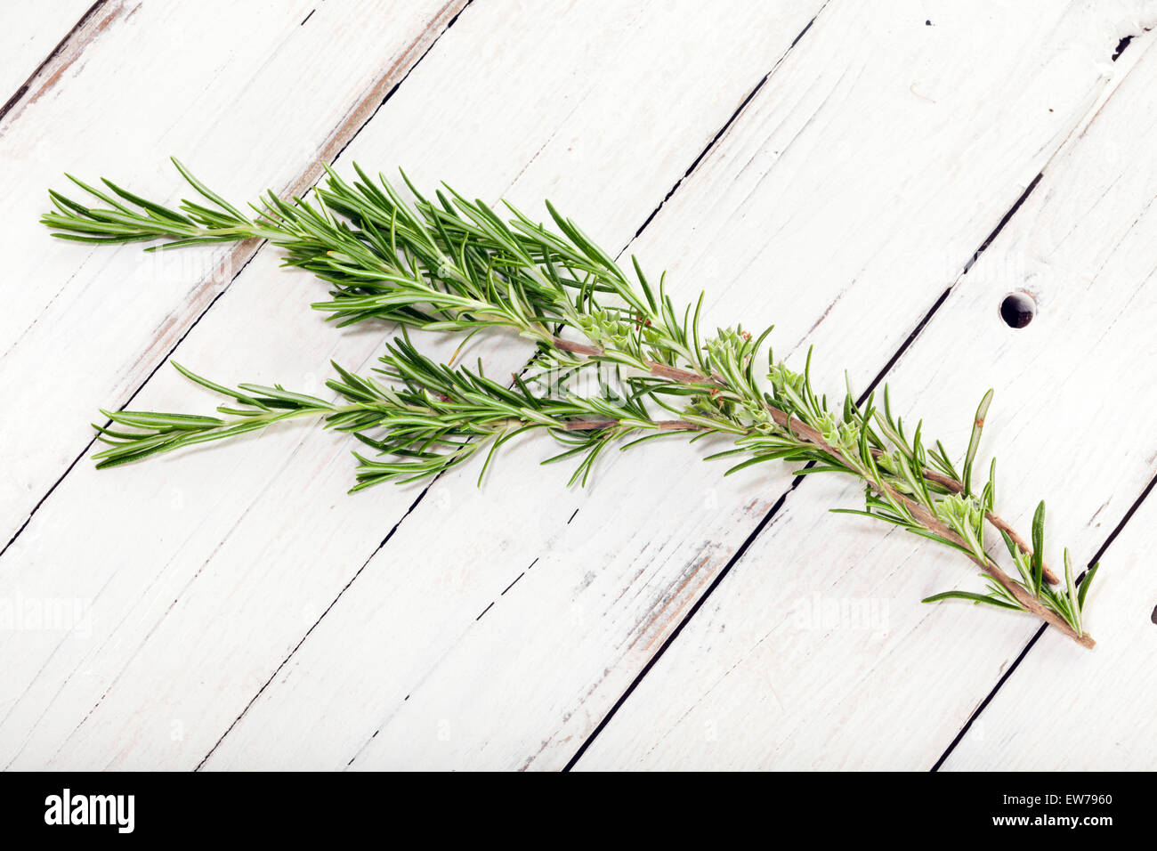 rosemary twig on white wooden rustic background - Stock Image