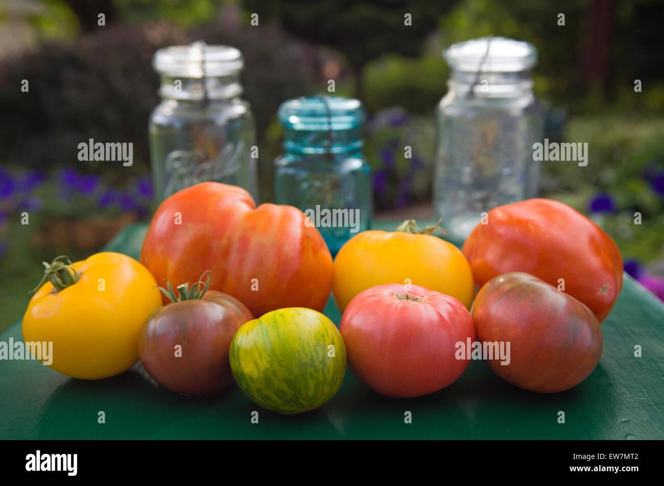Heirloom Tomatos and Vintage Canning Jars - Stock Image