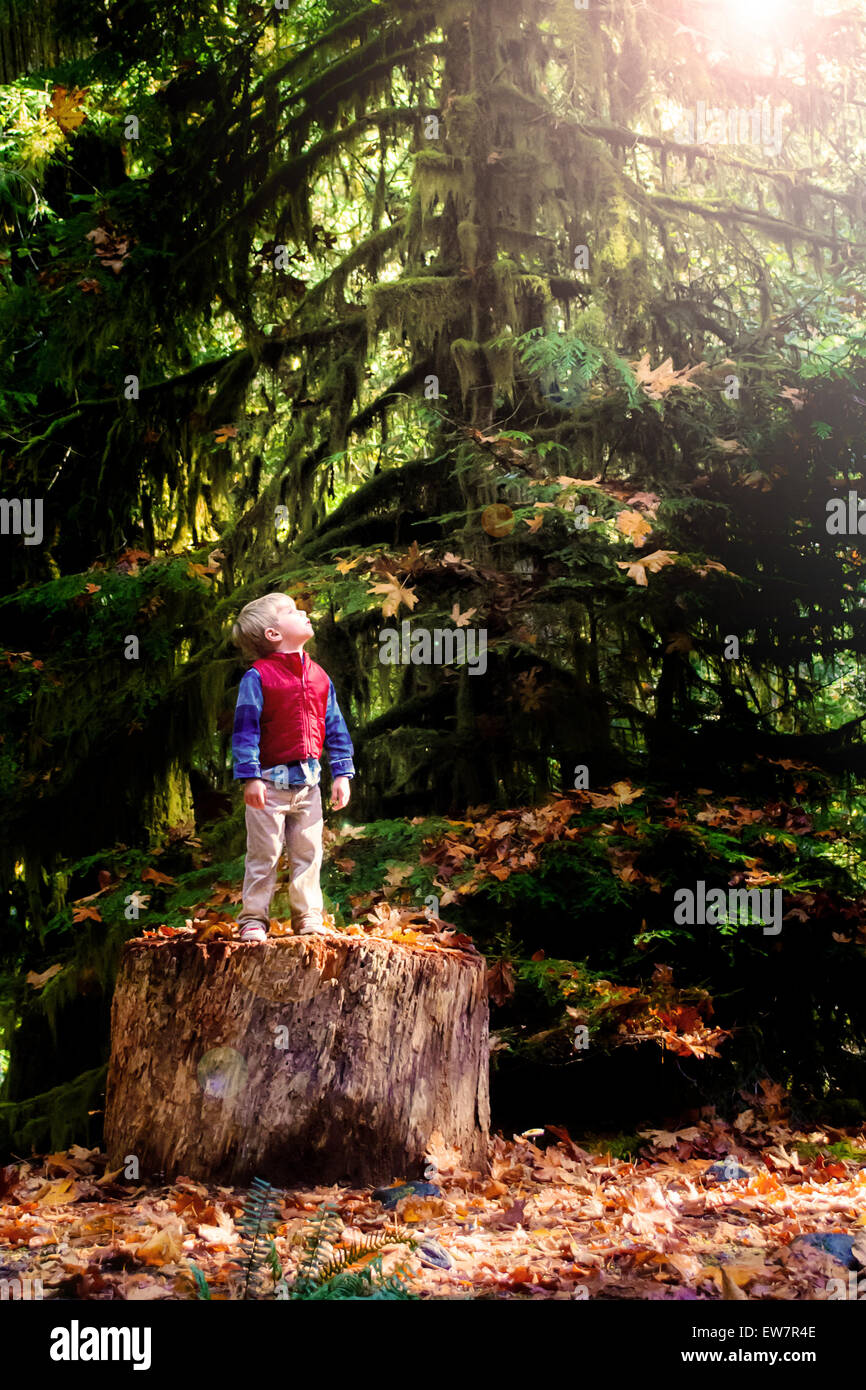 Boy standing on a tree trunk in the woods looking up at the sky - Stock Image