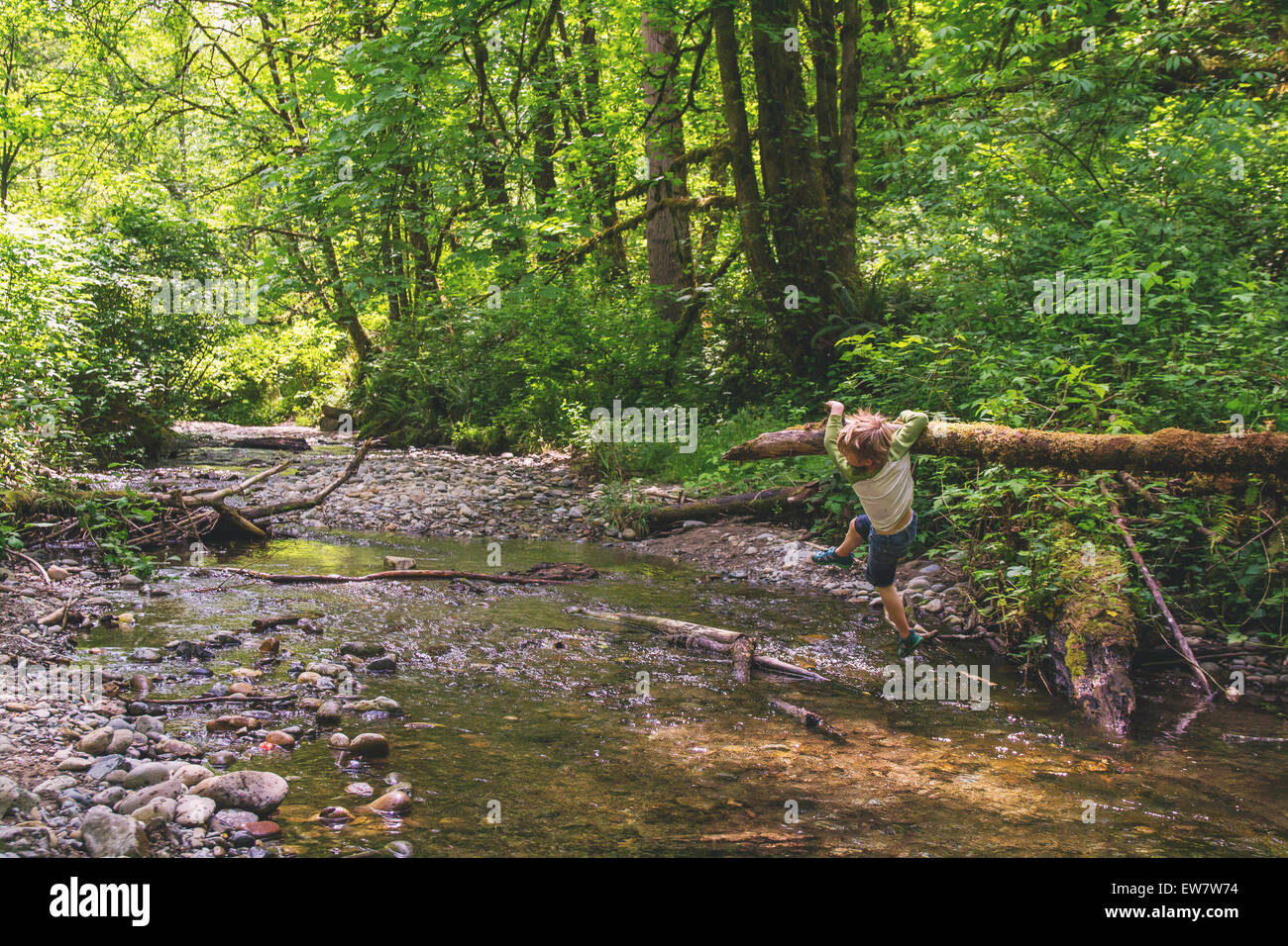 Boy hanging on fallen tree across small river - Stock Image