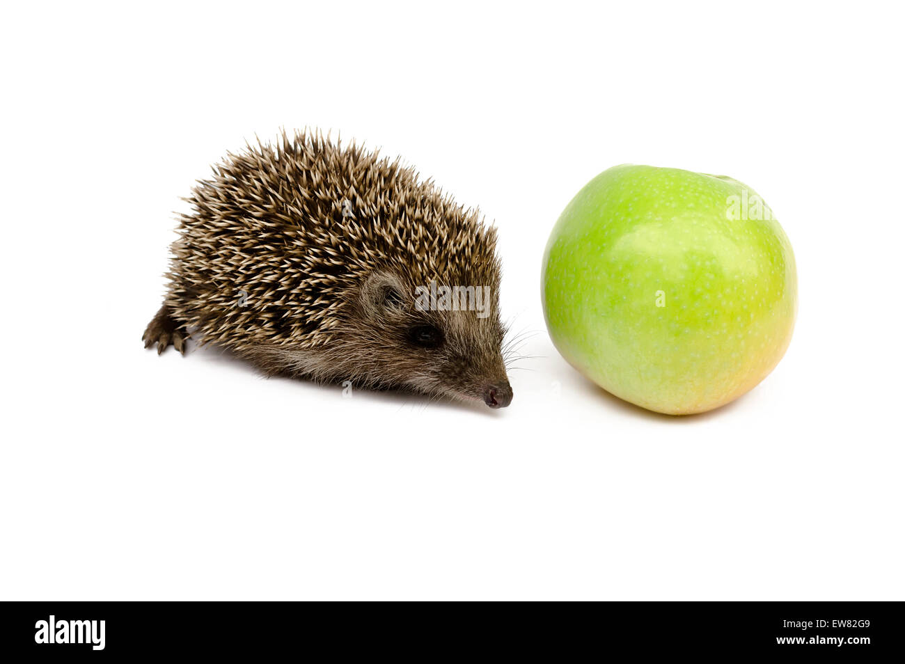 hedgehog with green apple - Stock Image