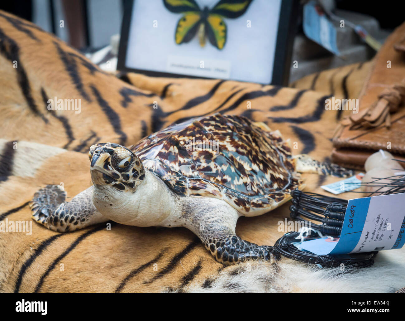 New York, USA. 19th June, 2015. A stuffed tortoise and other endangered species in Times Square in New York at the - Stock Image