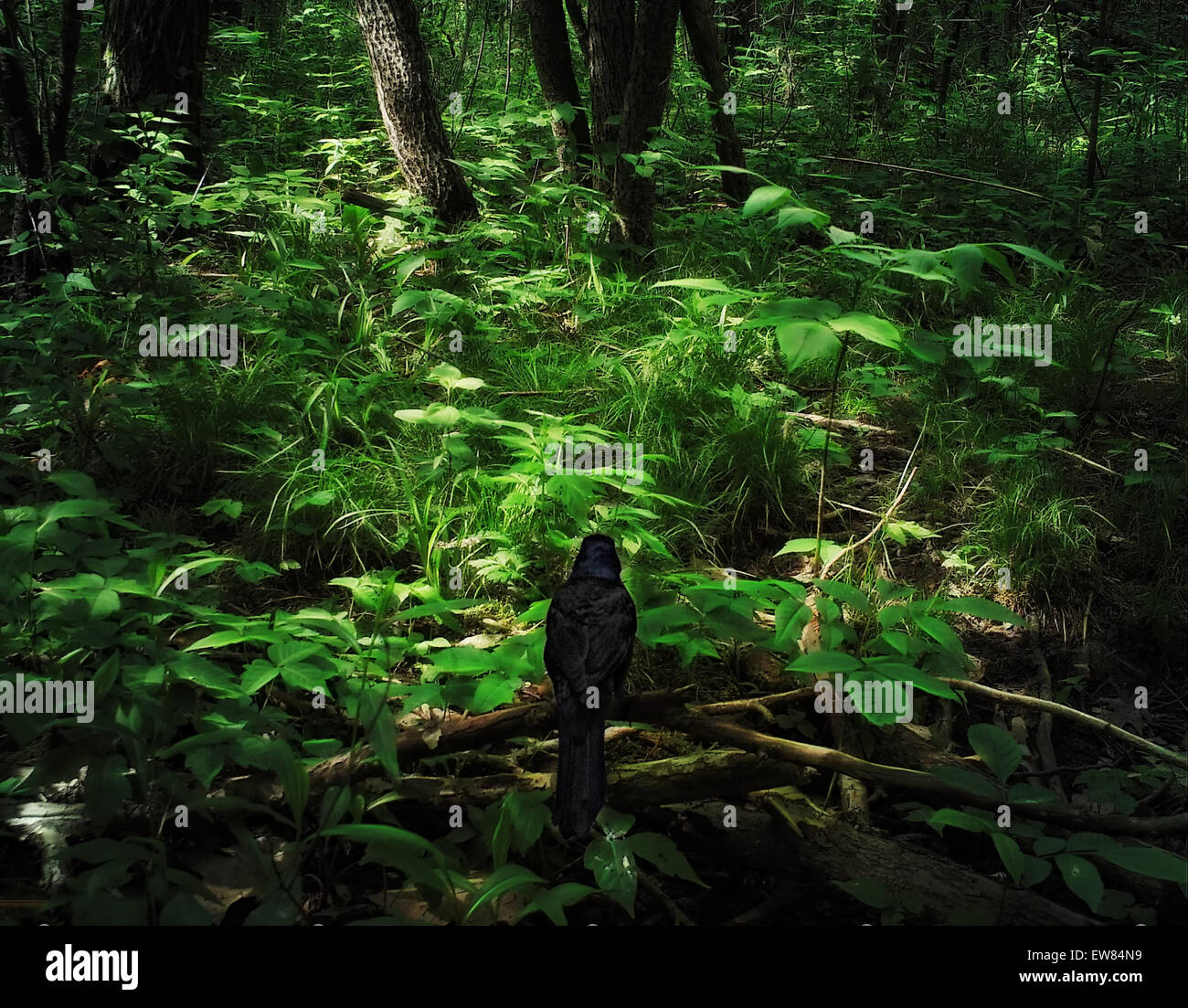 Starling in dark , foreboding forest - Stock Image