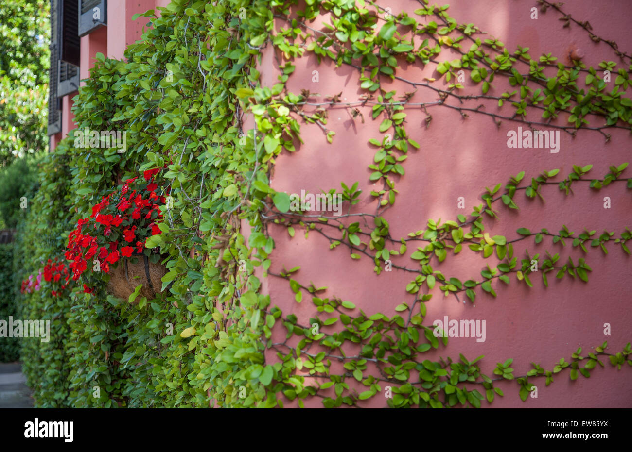 Beautiful flowers and vines along house wall in Charleston, South Carolina USA - Stock Image