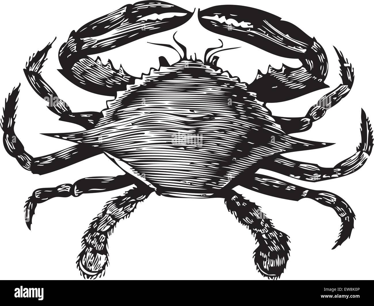 Großzügig King Crab Anatomy Fotos - Physiologie Von Menschlichen ...