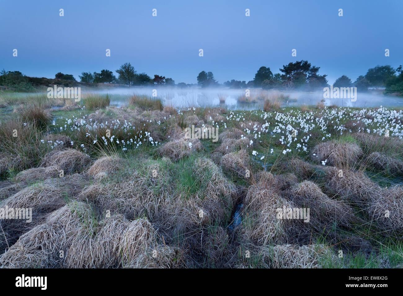 dusk on misty swamp, North Brabant, Netherland - Stock Image