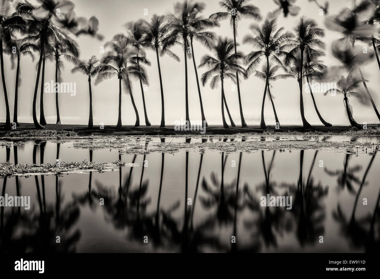 Pond reflecting palm trees. Black Sand Beach. Hawaii, The Big Island - Stock Image