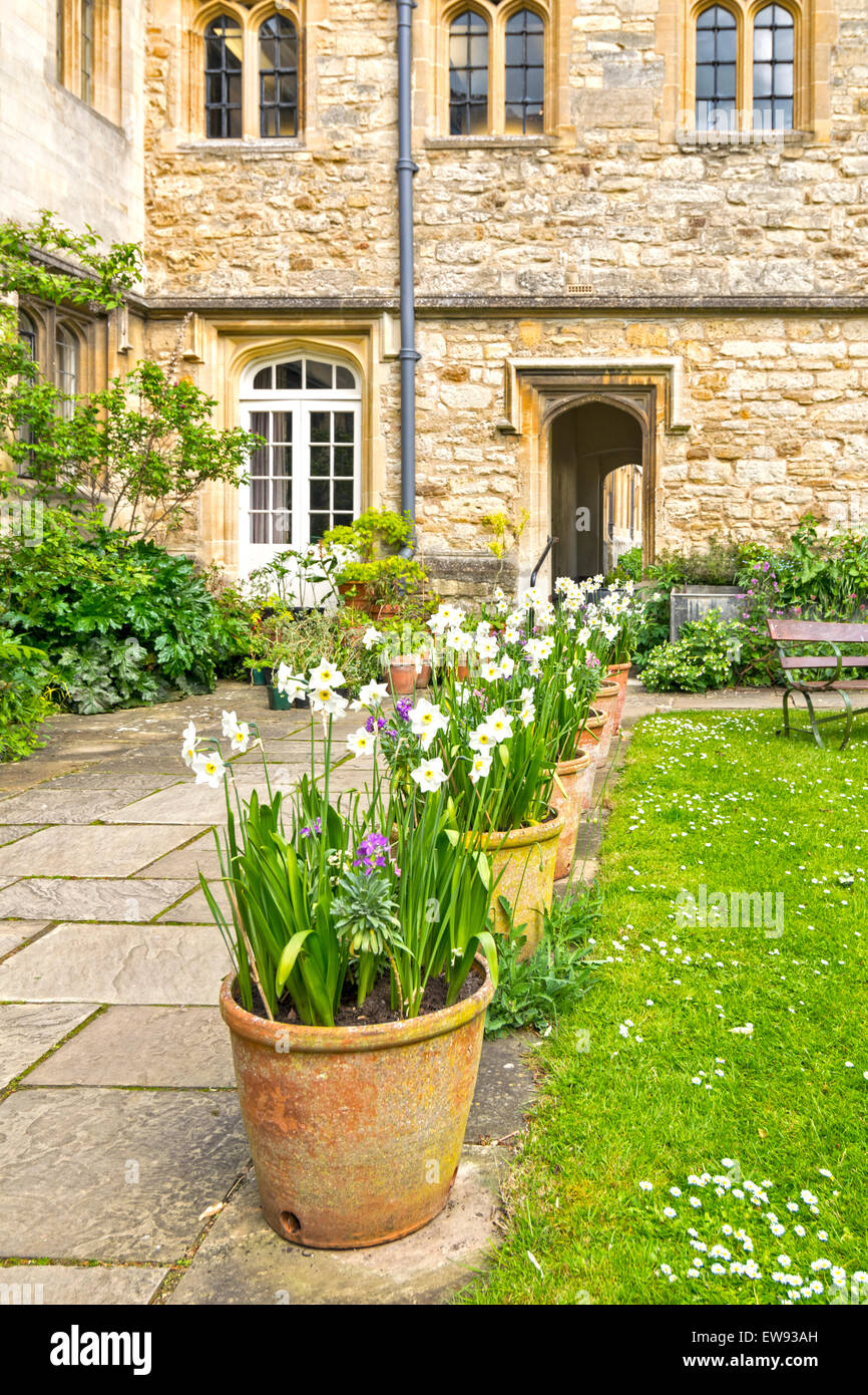 OXFORD CITY FLOWER POTS FILLED WITH NARCISSI IN SPRINGTIME AT CORPUS CHRISTI COLLEGE - Stock Image