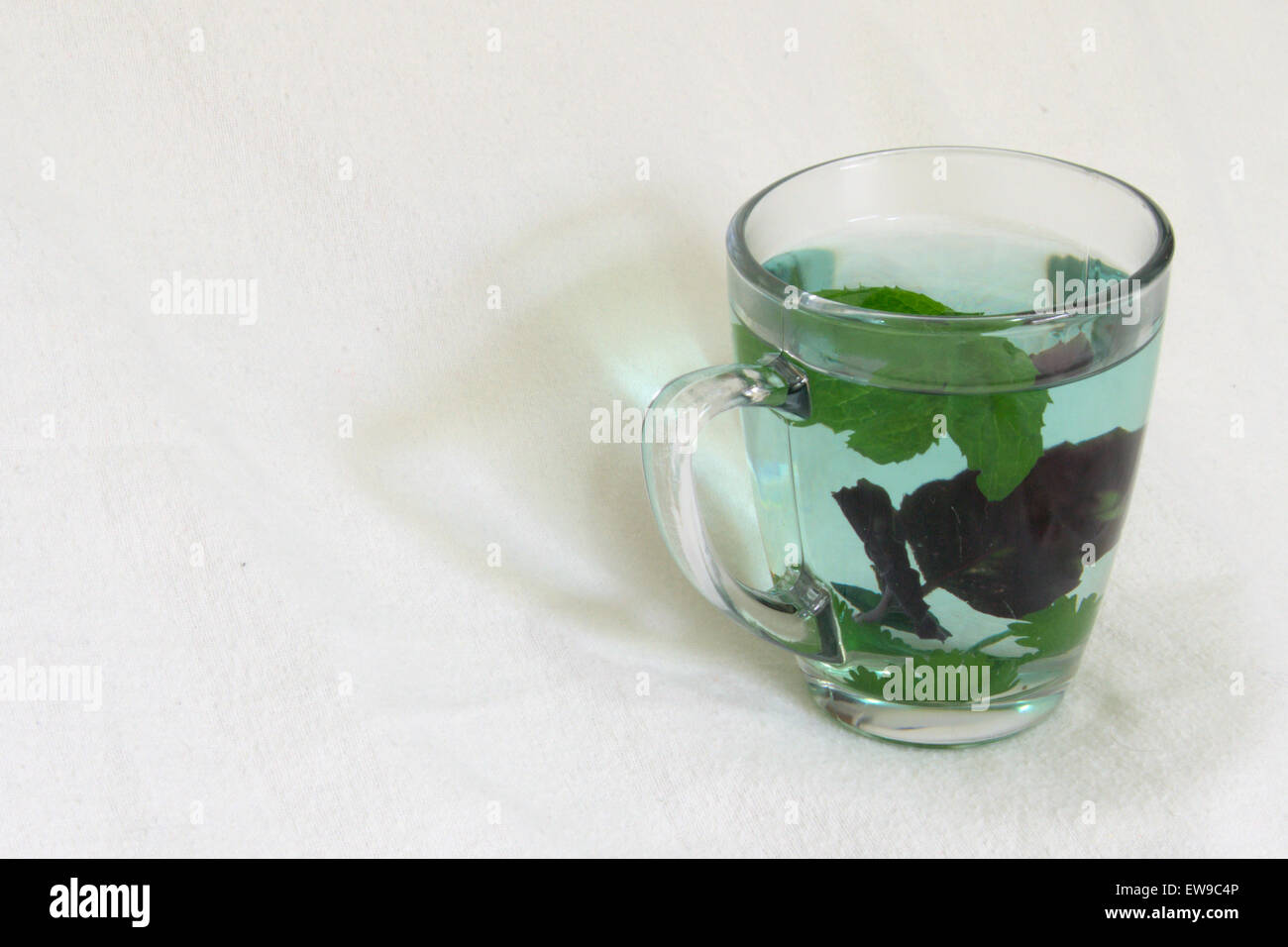 Fresh herbal infusion in a clear glass - Stock Image